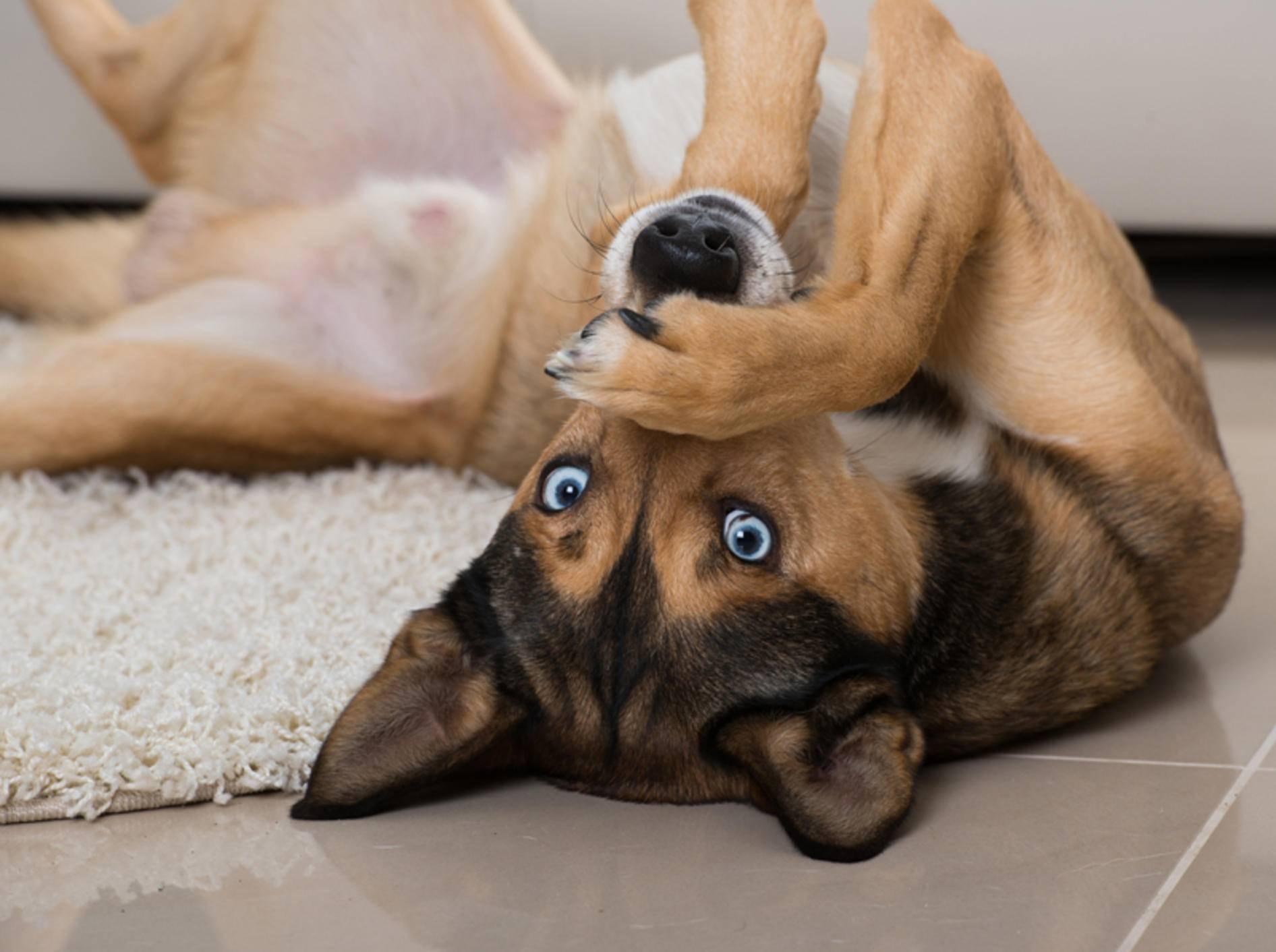 """Dieser Hund findet: """"Wenn man nichts Nettes über uns Vierbeiner zu sagen hat, soll man lieber schweigen"""" – Shutterstock / Dora Zett"""