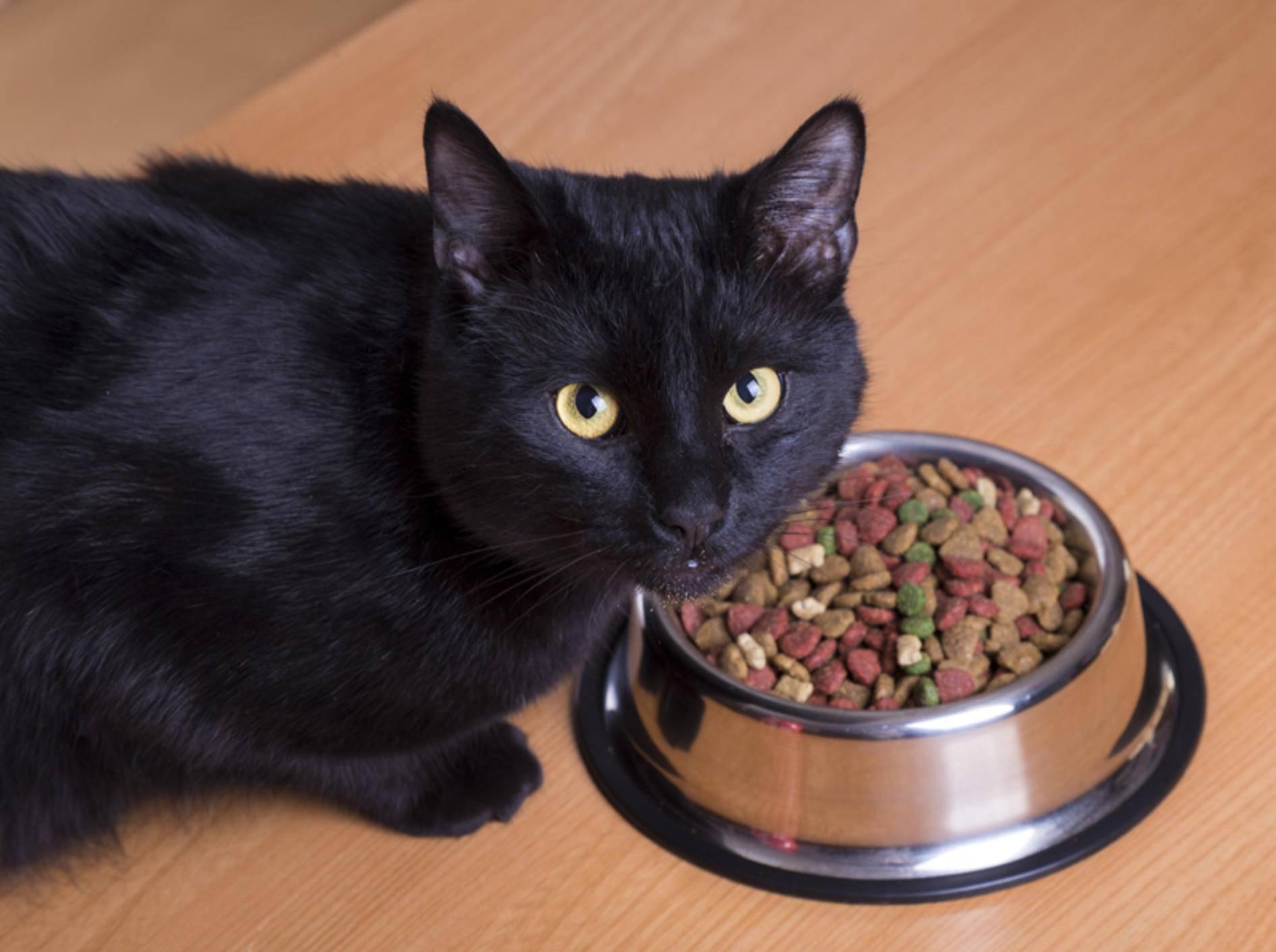 """""""Das soll ich fressen? Was ist denn da überhaupt alles drin?"""": Diese schwarze Katze mag ihr Futter wohl nicht – Shutterstock / aleg baranau"""