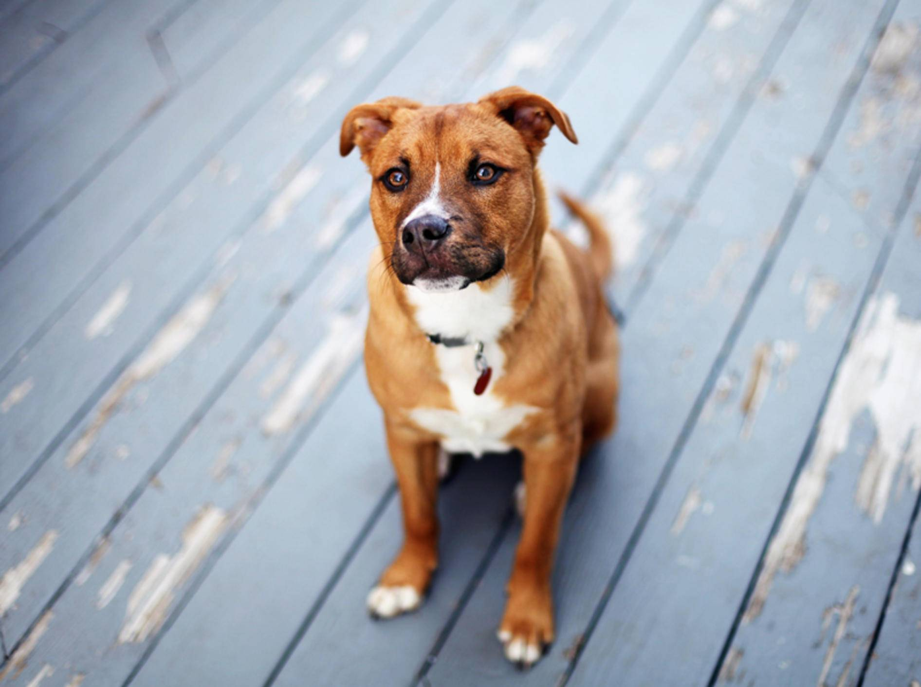 Dieser brave Hund scheint ein Profi in Sachen Impulskontrolle zu sein – Shutterstock / N K
