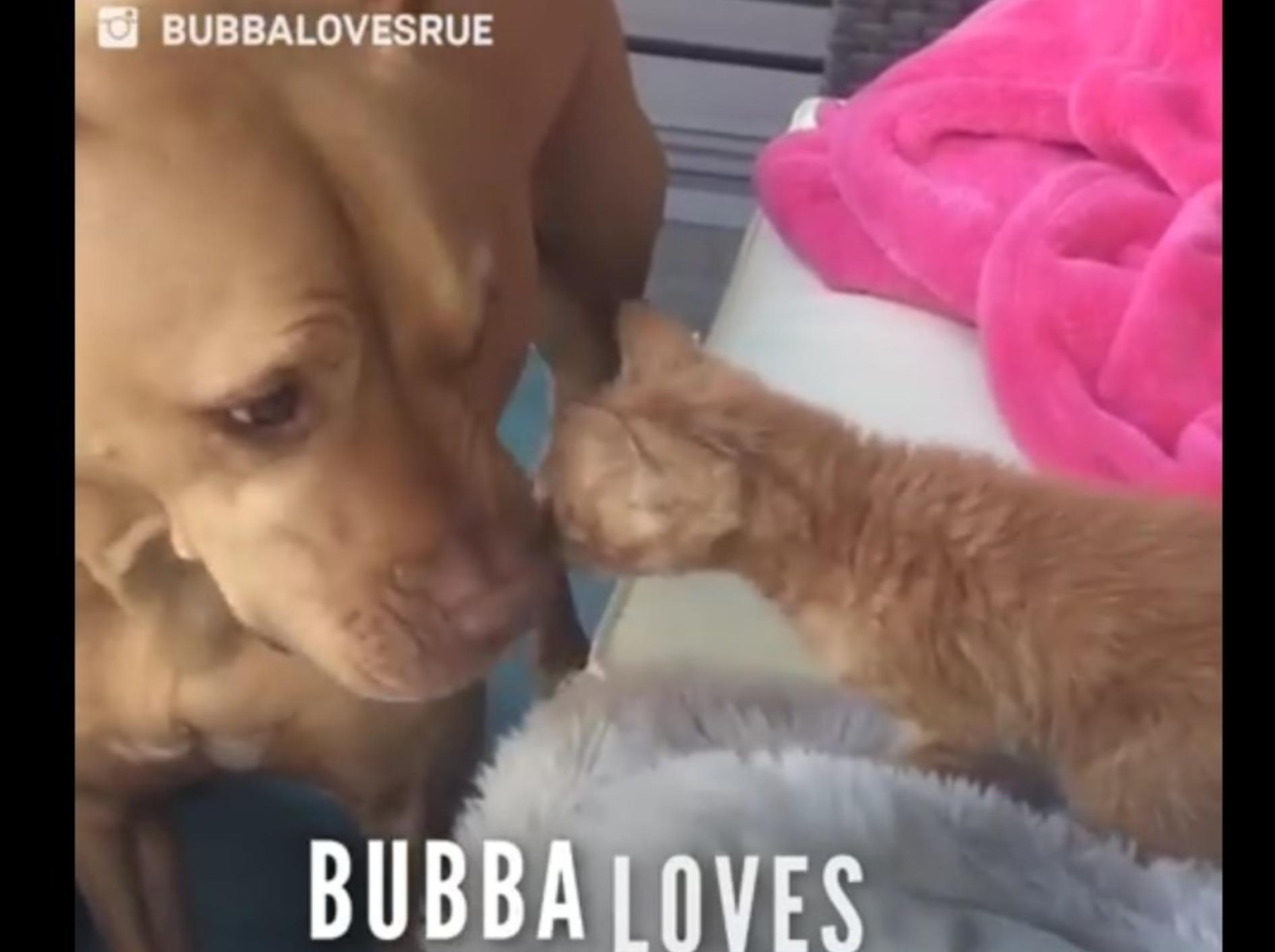 Bubba und Rue sind die besten Freunde – YouTube / The Dodo