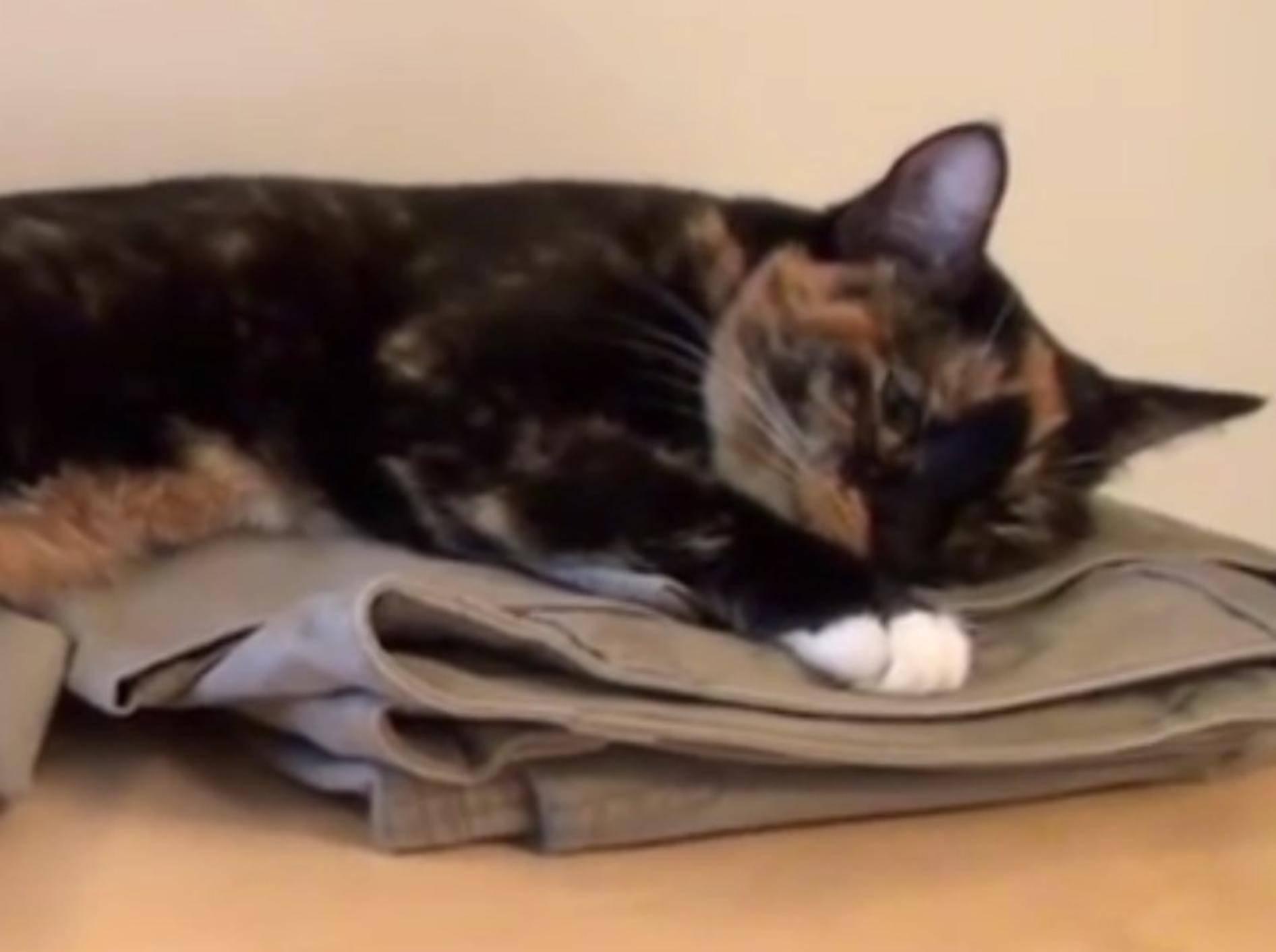 So praktisch, wenn die Katze die Kleidung platt drückt – YouTube / DrNworb's KitsCats