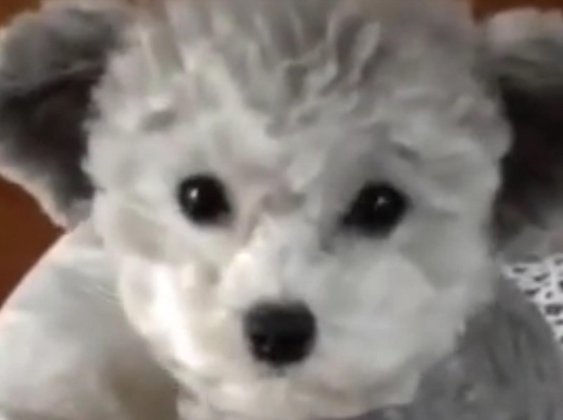 Wie süß kann ein Hund sein? Dieser Welpe ist ein Traum! – YouTube / clipsofFilms
