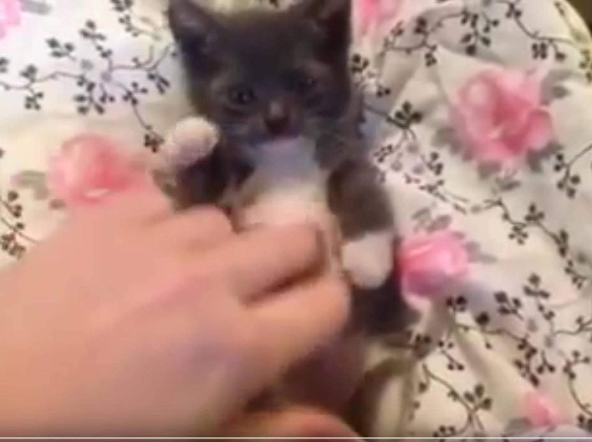 Findelkaterchen Ryder genießt Spielstunde – YouTube / Sparkle Cat Rescue, Inc.