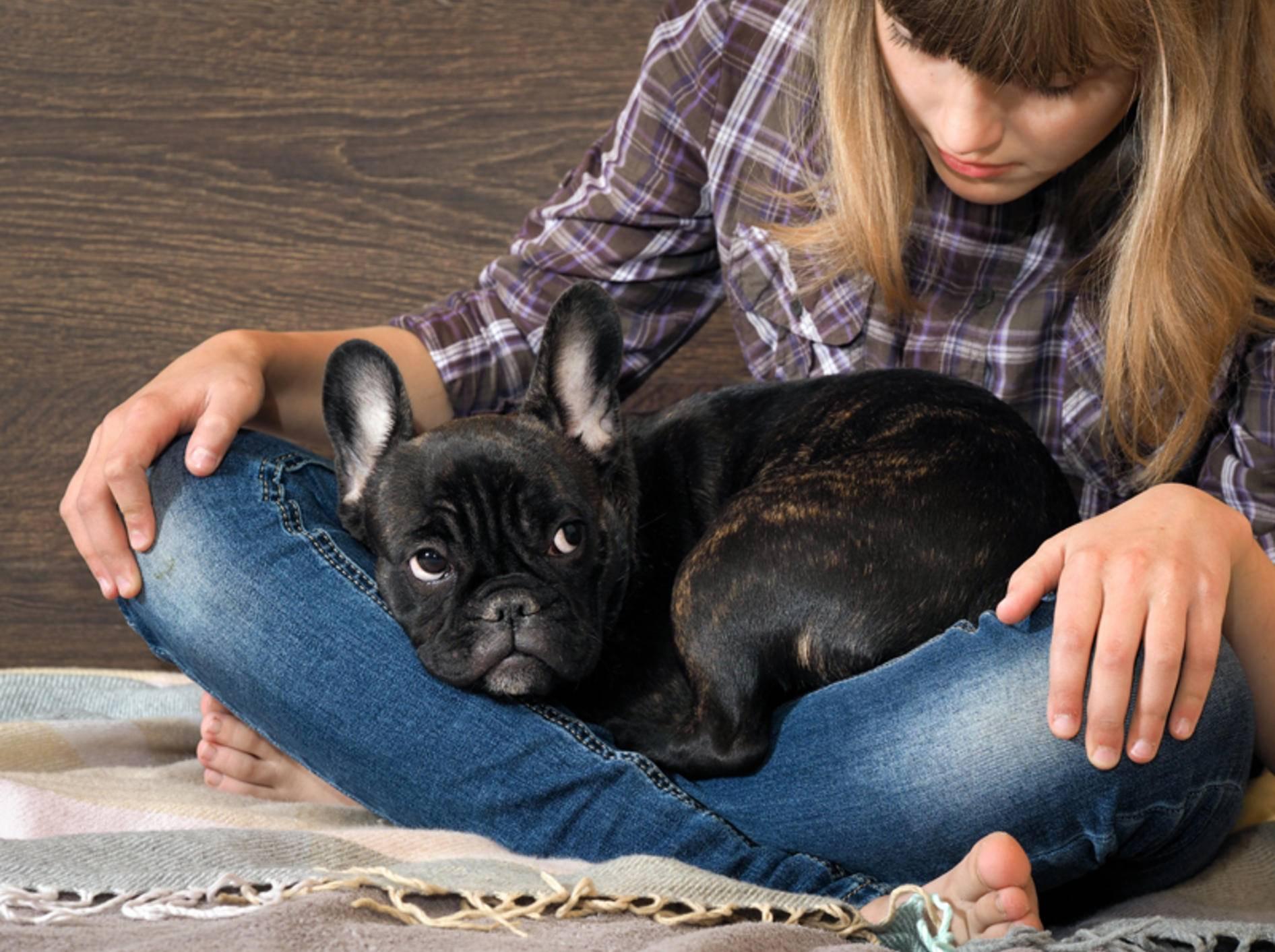 """""""Lass mich bitte nicht allein"""", scheint diese ängstliche französische Bulldogge zu denken – Shutterstock / Irina Kozorog"""