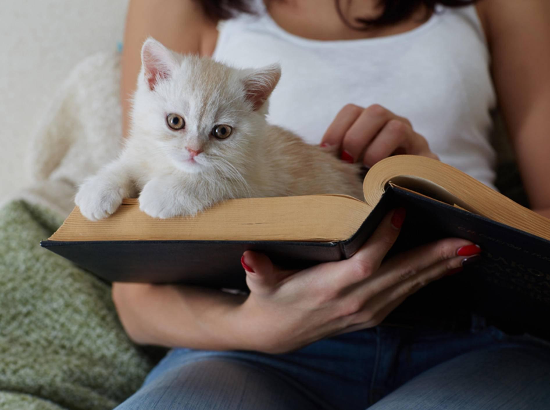 """""""Was liest du da? Kann ich mitlesen? Ach, ich bleib einfach hier liegen, das ist so schön gemütlich"""": Kleine Katze liebt Papier – Shutterstock / Demidov Sergey"""