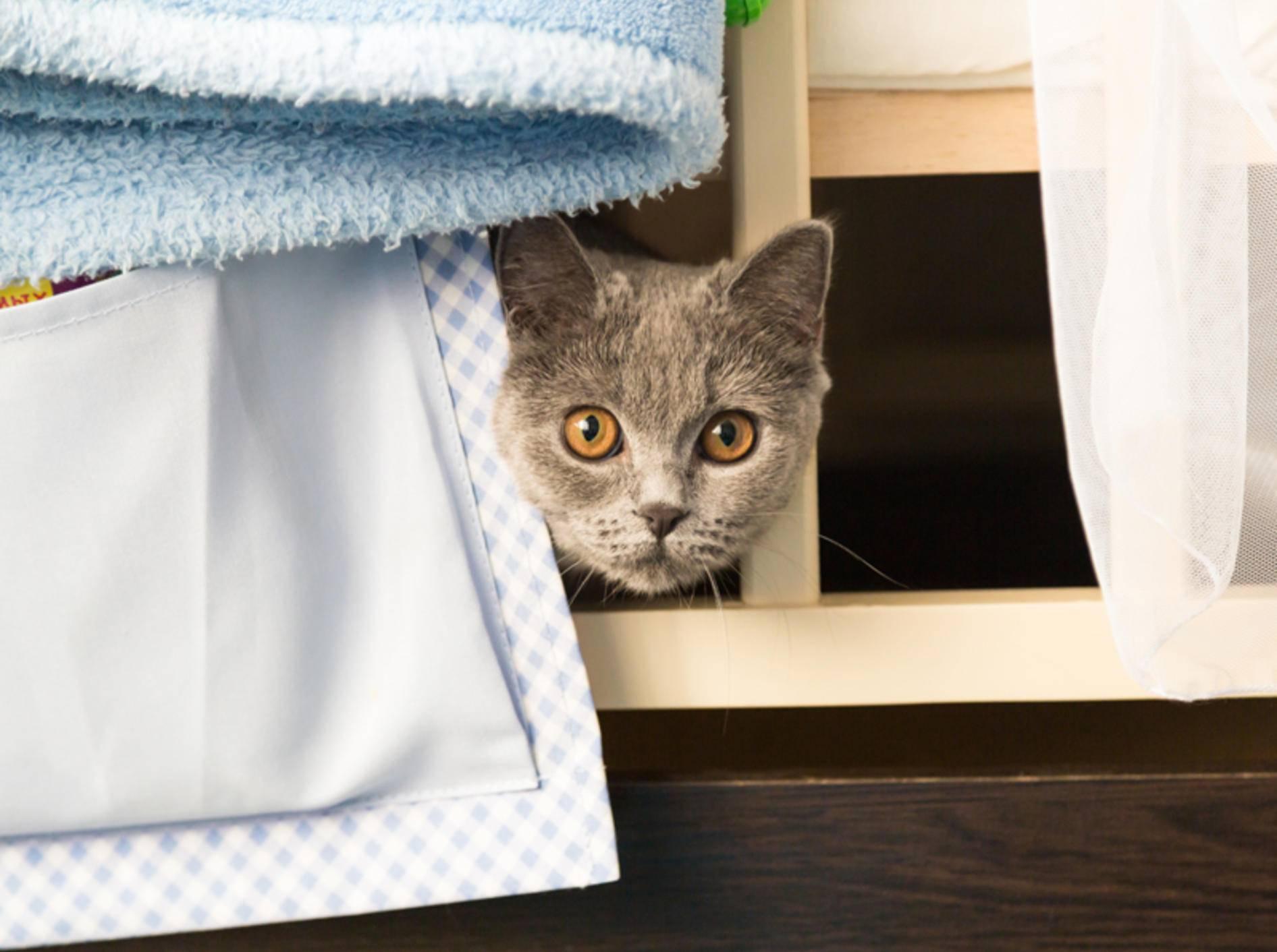 """""""Hilfe! Besuch! Schnell verstecken"""", scheint diese schüchterne Katze zu denken – Shutterstock / katfox.art"""