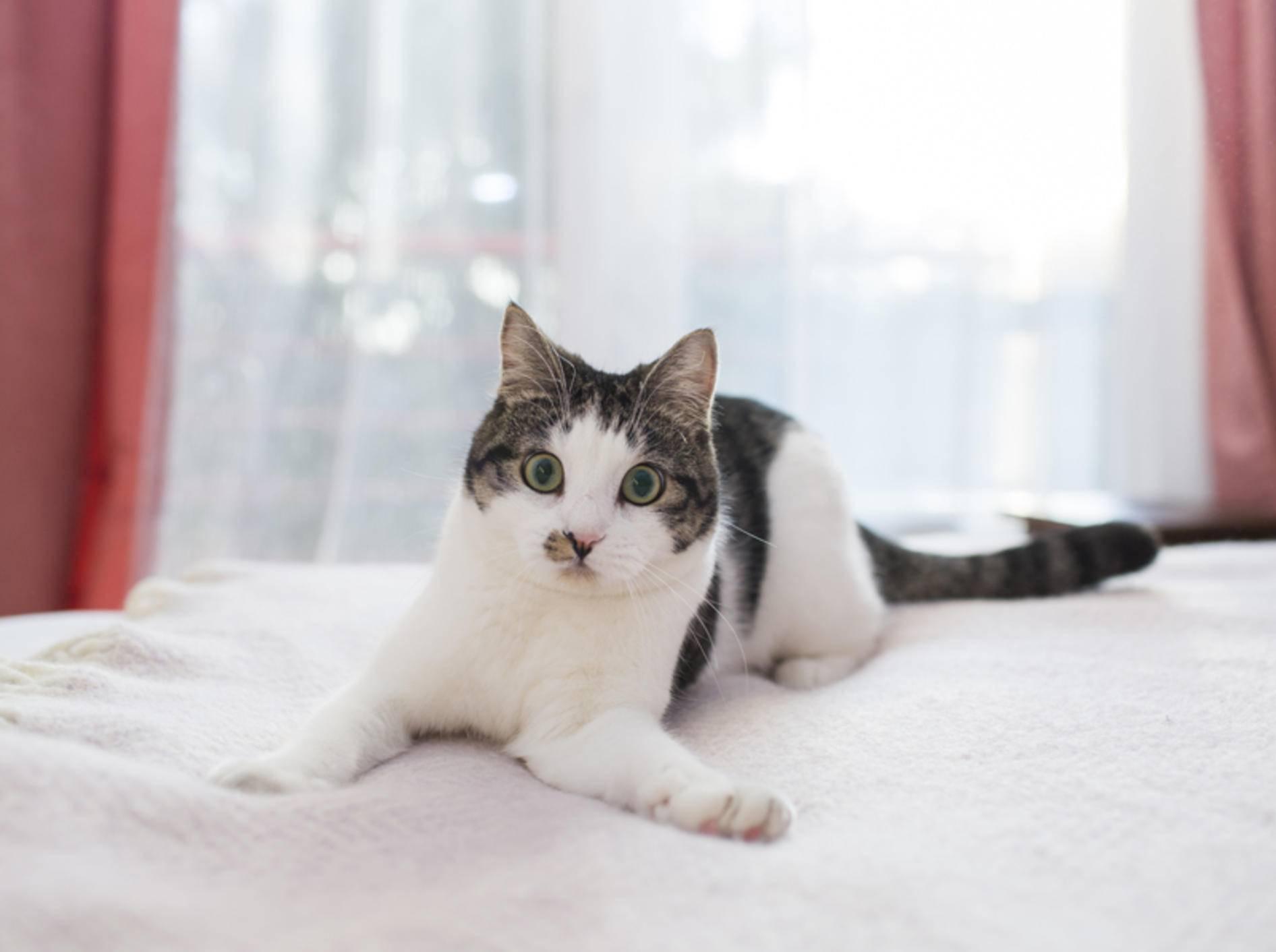 """""""Soll ich's wirklich machen oder lass ich's lieber sein? Jein!"""": Katzen lassen sich bei ihren Entscheidungen gern Hintertürchen offen – Shutterstock / kmsh"""
