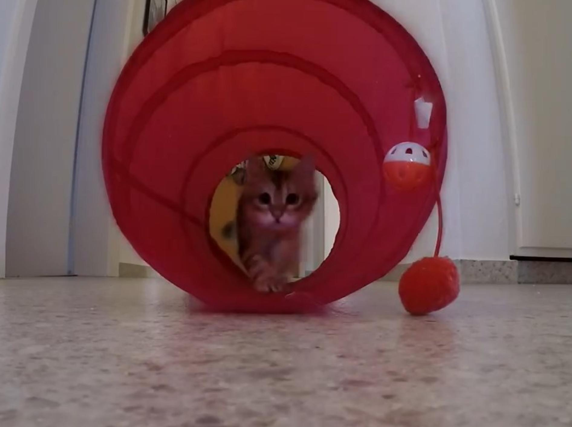 Rutschen geht am besten in einem Katzentunnel! – YouTube / ForestCats