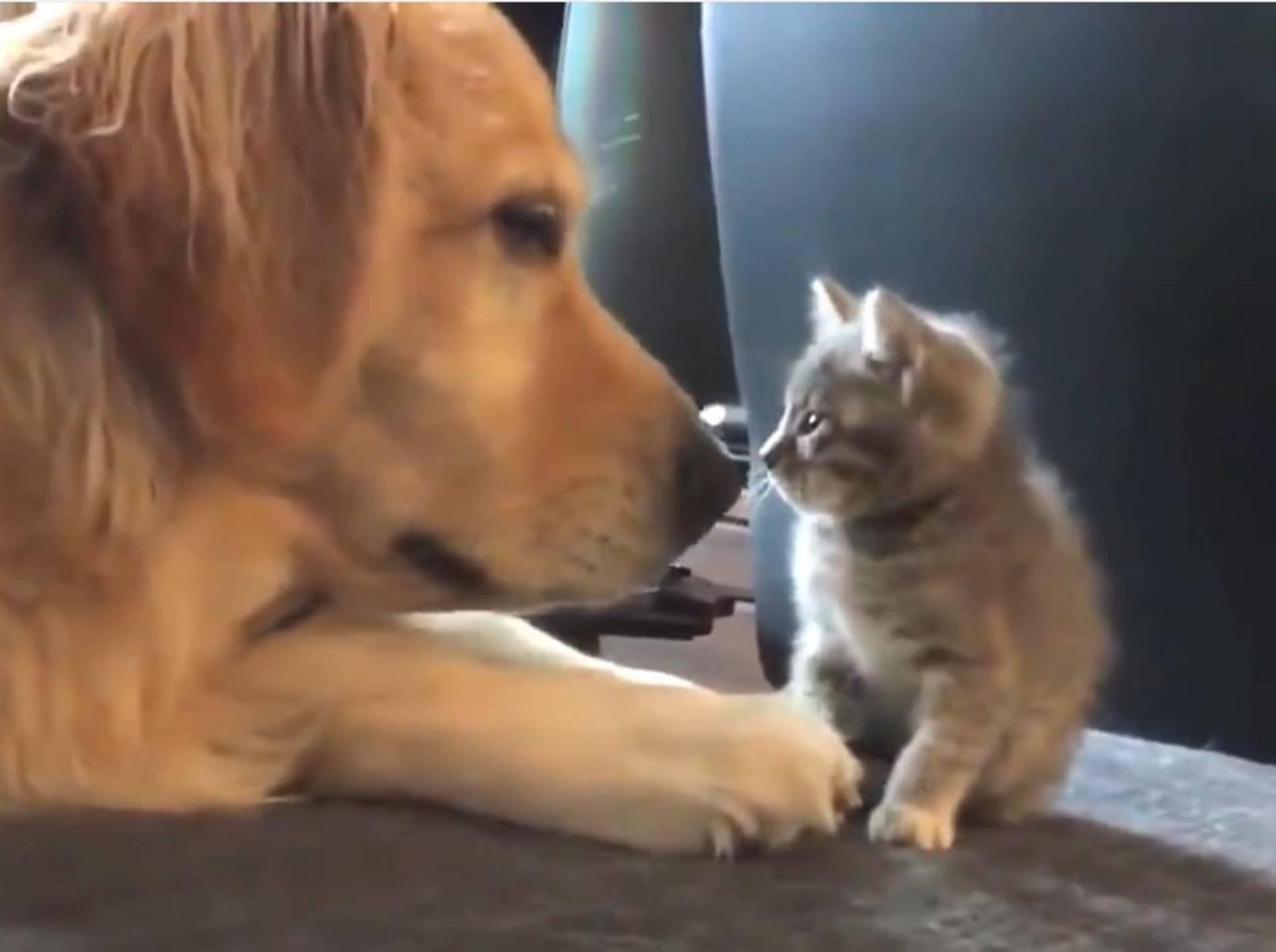 Groß und Klein – diese beiden Tierfreunde sind ein Herz und eine Seele – YouTube / Dogs' Diary