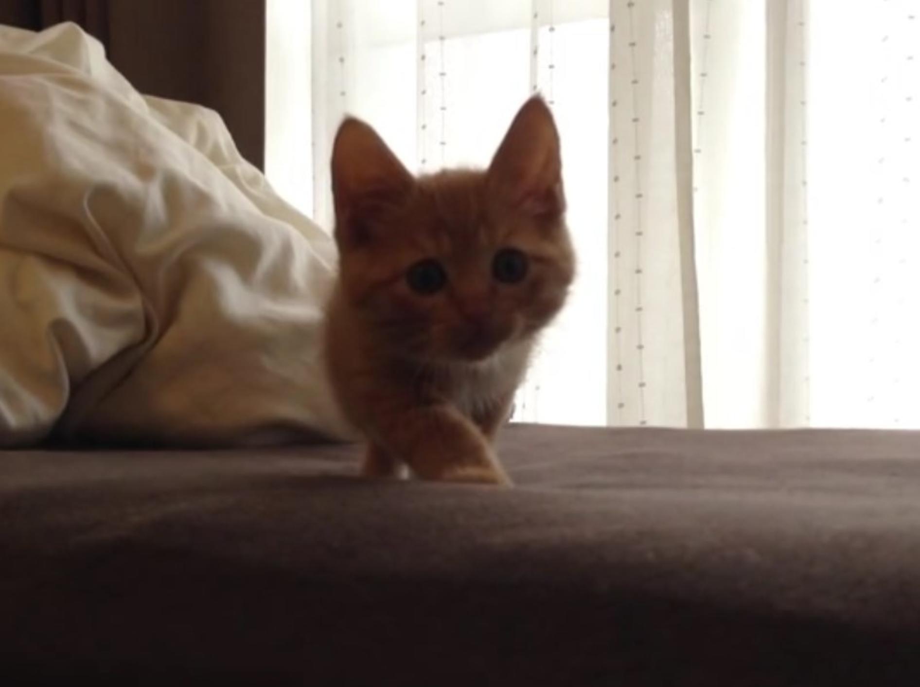 Hiroshi übt das Jagen auf dem Bett – und stellt sich gut dabei an! – YouTube / Tabby Cat Hiroshi