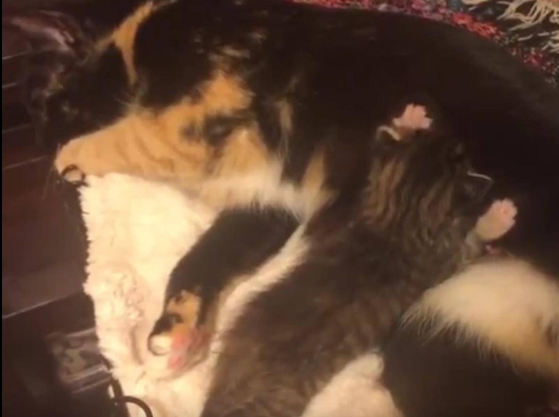 Dieses kleine Schlabbermaul hat mächtig Durst! – YouTube / Sparkle Cat Rescue, Inc.