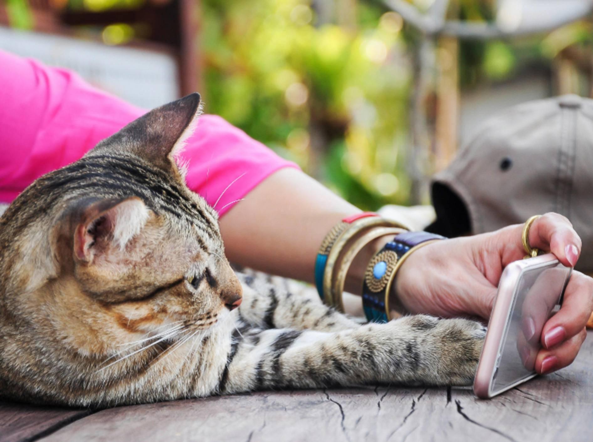 Katzen verstehen nicht, warum Menschen so viel mit diesem flachen Gegenstand sprechen – Shutterstock / Chaiwatk58
