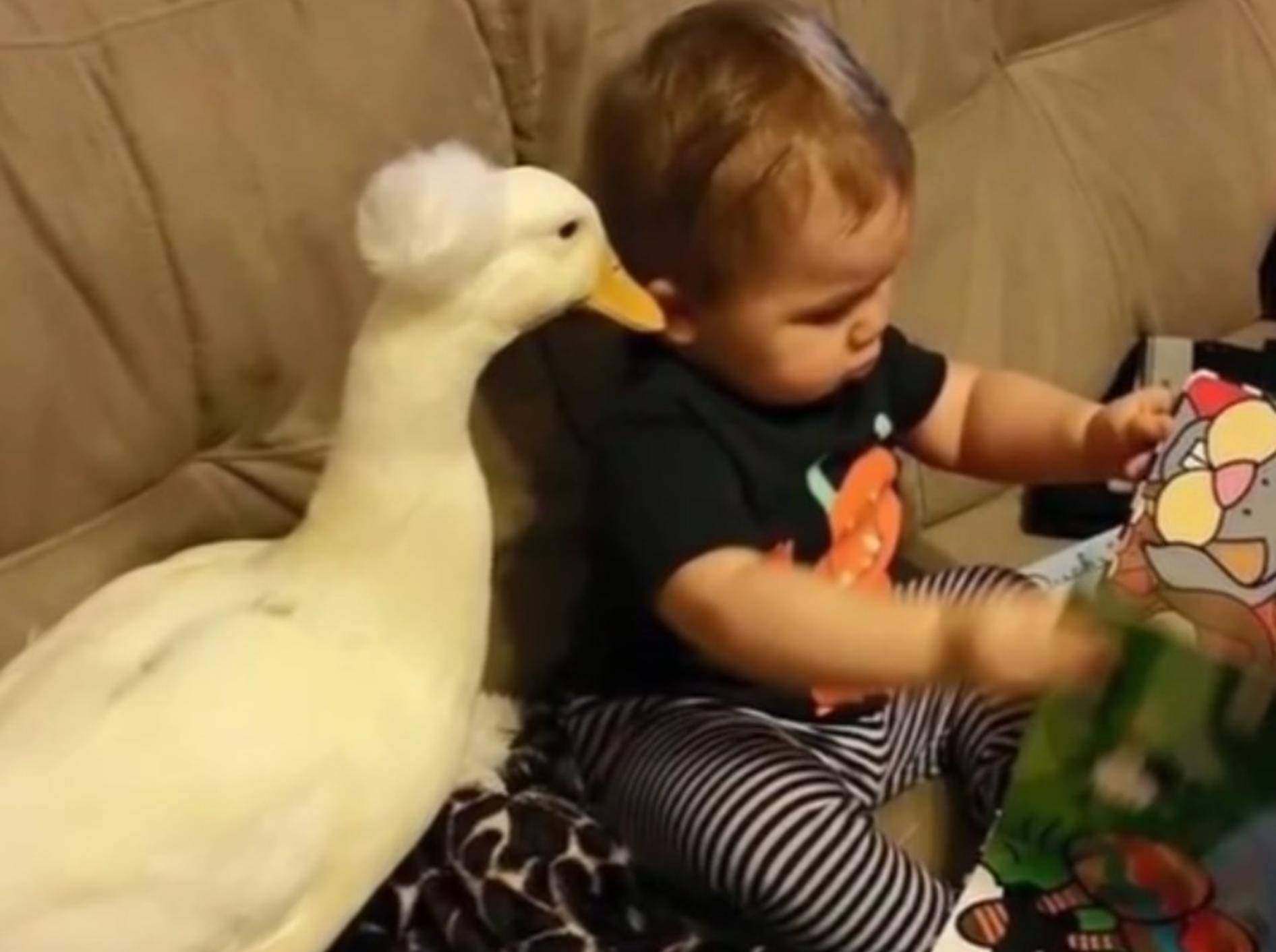 Was für andere Kinder seltsam ist, ist für Tyler ganz normal: Ein Entenfreund! – YouTube / SlideShow ForFun