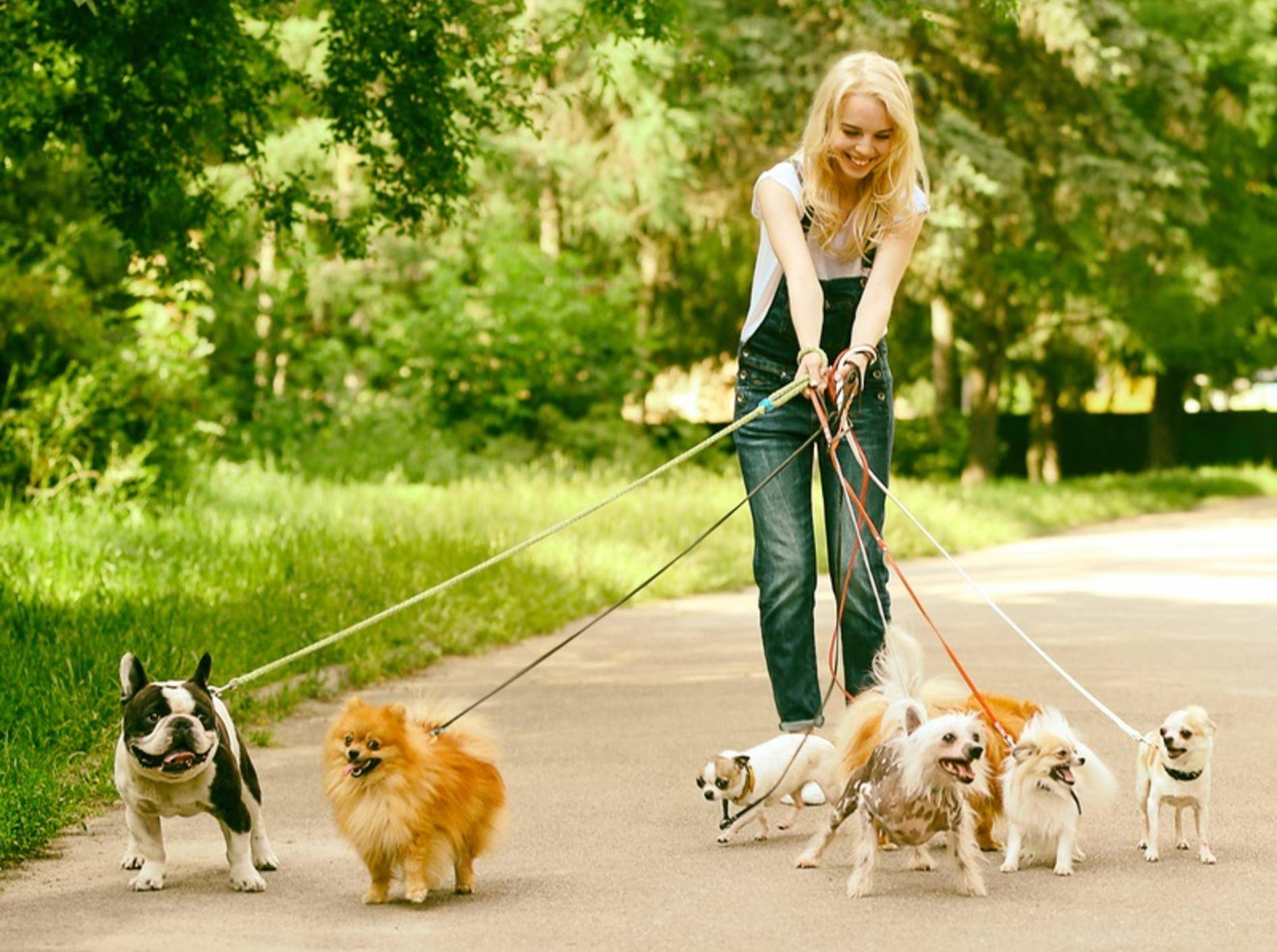 Die kleinen Racker halten ihre Hundesitterin ganz schön auf Trab! – Shutterstock / Africa Studio