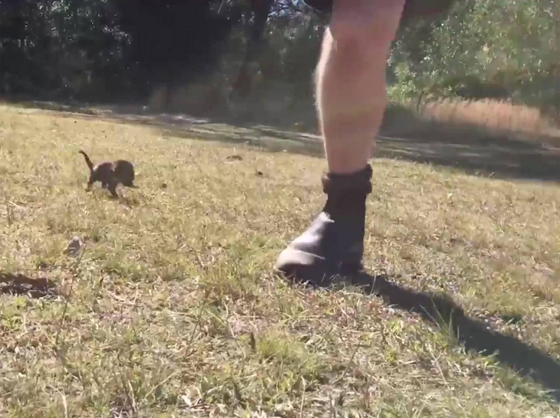 Baby-Tasmanischer Teufel jagt seinen Pfleger – YouTube / The Dodo