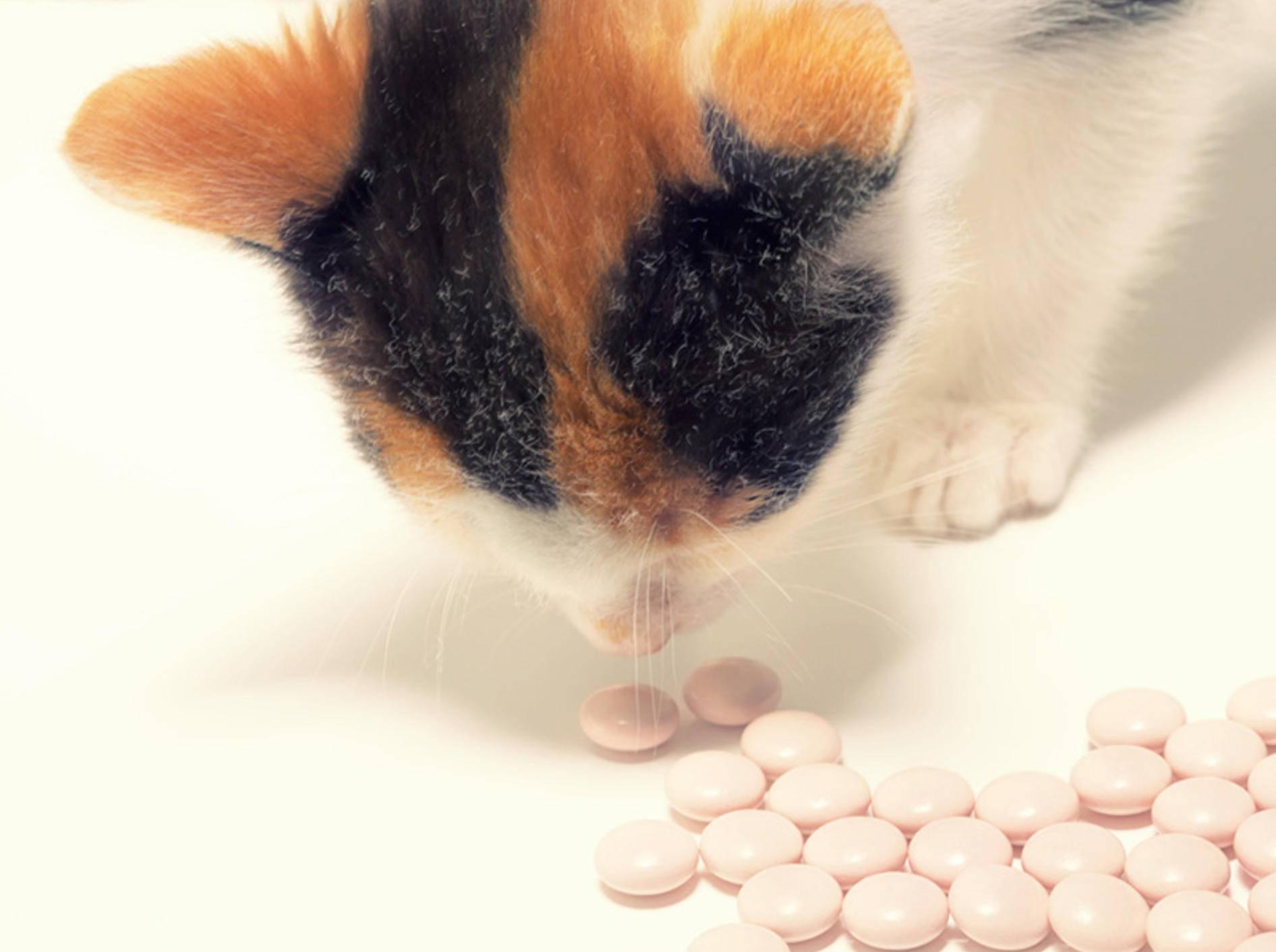 Für Katzen sollten Paracetamol und andere Medikamente auf keinen Fall zugänglich sein – Andrii Muzyka/Shutterstock
