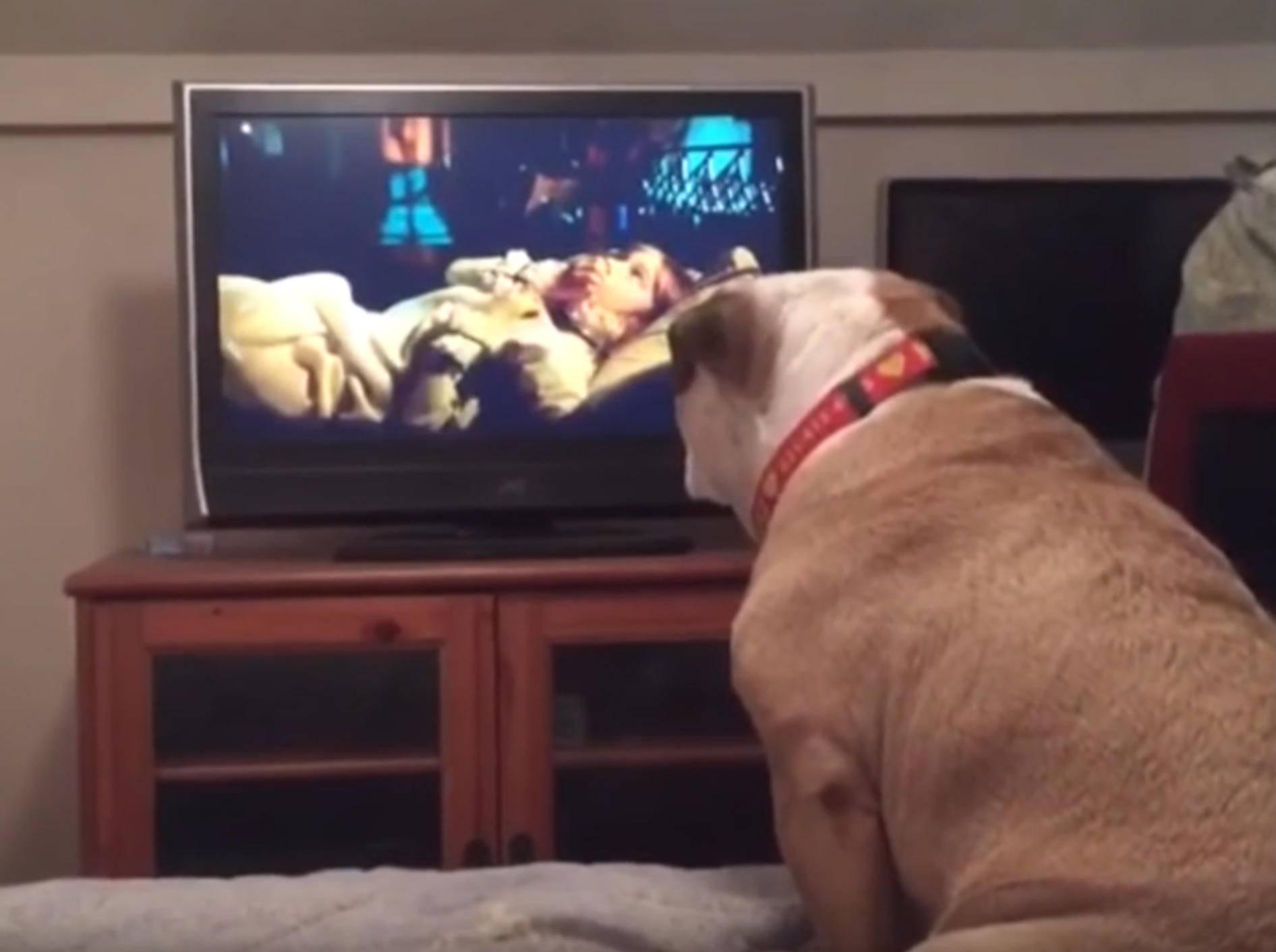 Englische Bulldogge will Mädchen in Horrorfilm warnen – YouTube / Rumble Viral