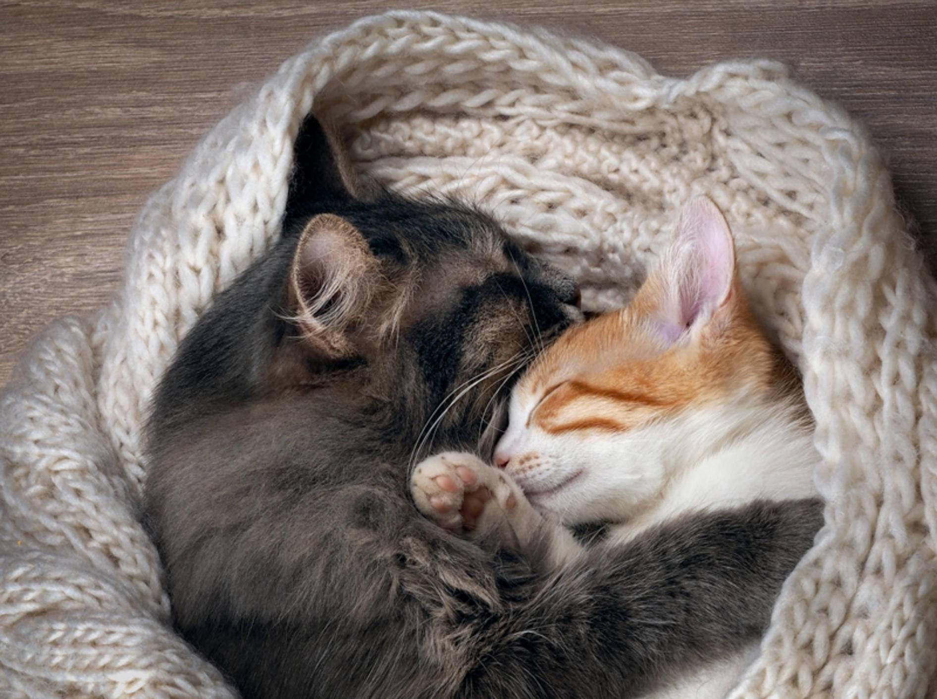 Wer kann bei diesem herzerweichenden Anblick noch behaupten, Katzen hätten keine Gefühle? – Shutterstock / Irina Kozorog