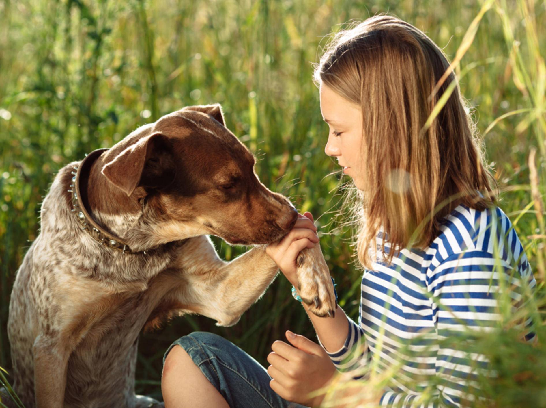 Eine zauberhafte Freundschaft zwischen Hund und Mensch... Shutterstock / Aloha Hawaii
