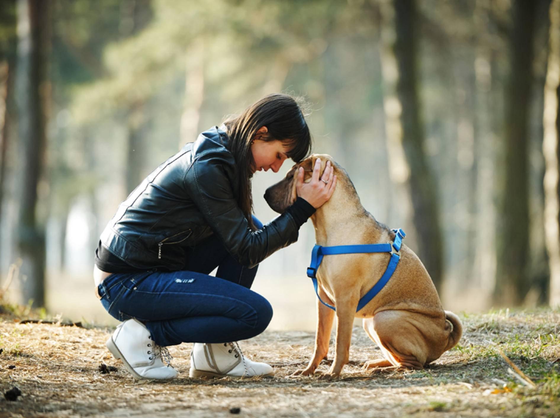 """""""Wir zwei sind ein tolles Team"""": Der Hund und sein Frauchen haben eine enge Bindung zueinander – Shutterstock / AlohaHawaii"""