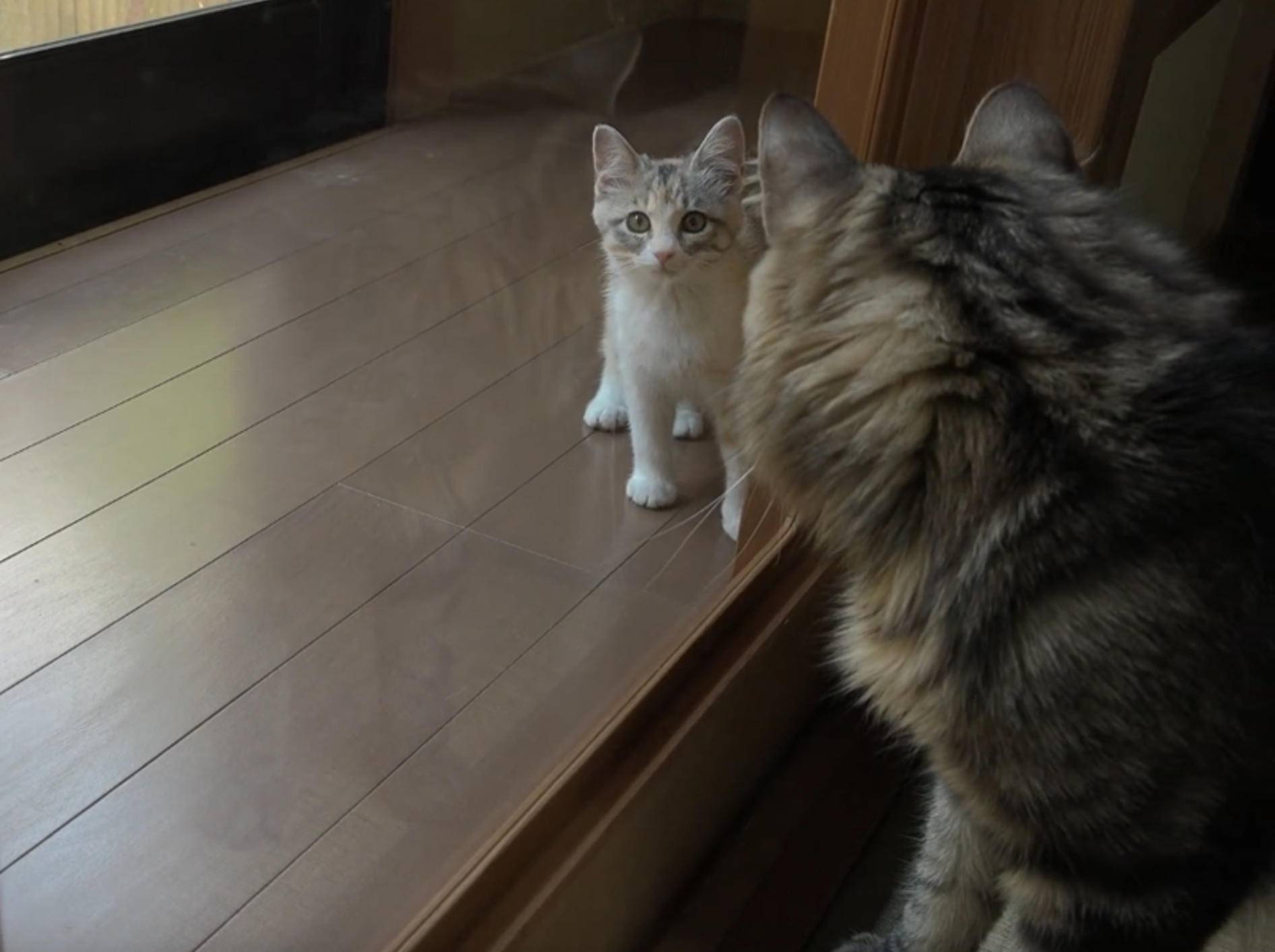 Katzen-WG in Japan bekommt Kätzchen-Zuwachs – YouTube / 10 Cats.