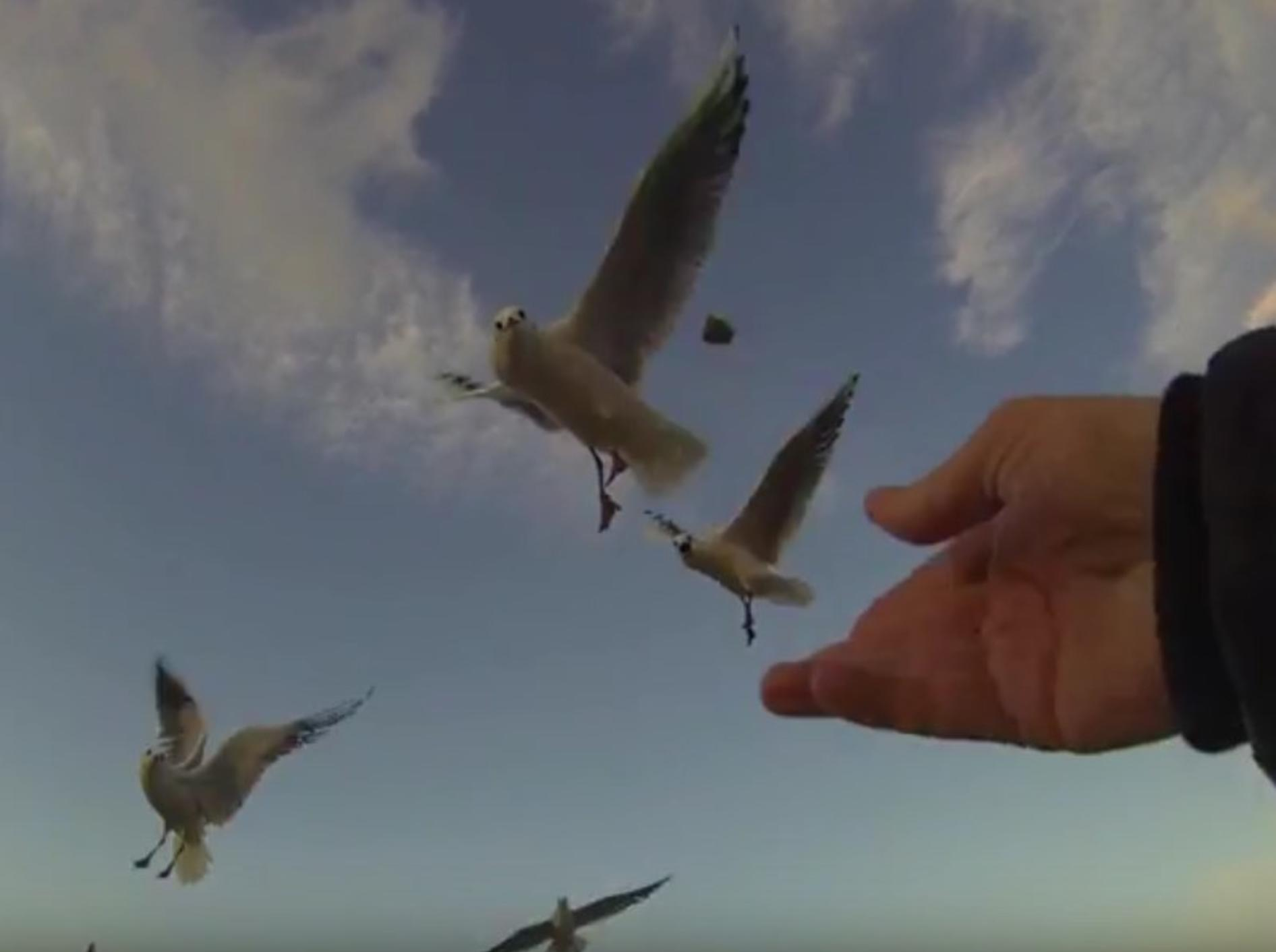 Fast unwirklich schweben die Möwen in Zeitlupe am Himmel – YouTube / mbhsug