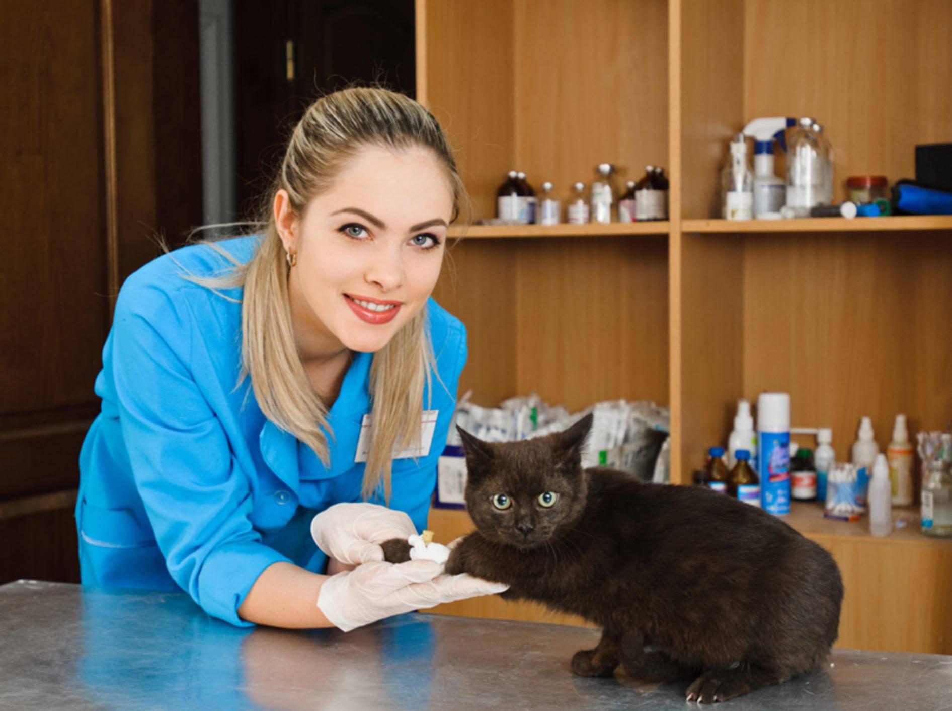 Die Tierärztin hilft dem unter Schmerzen leidenden Kätzchen