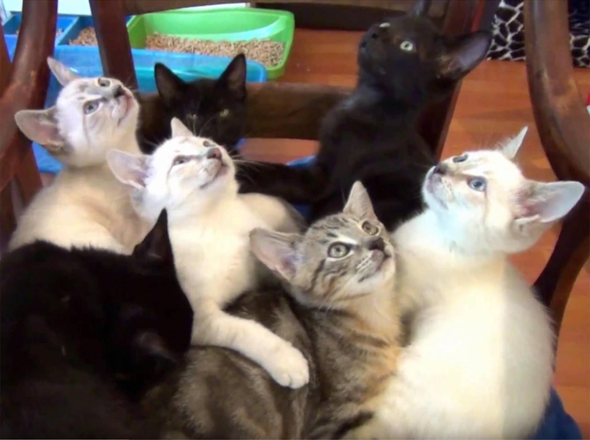 Flauschiges Schnurrkonzert mit sieben Pflegekätzchen – YouTube / DrNworb's KitsCats