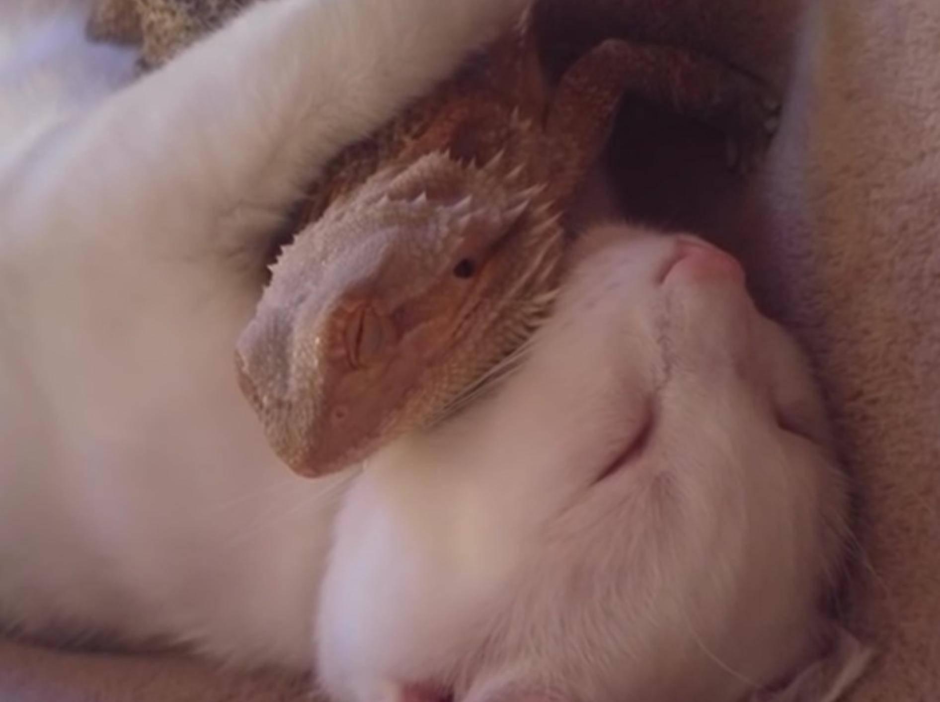So süß ist dieses ungewöhnliche Paar – YouTube / Caters Clips