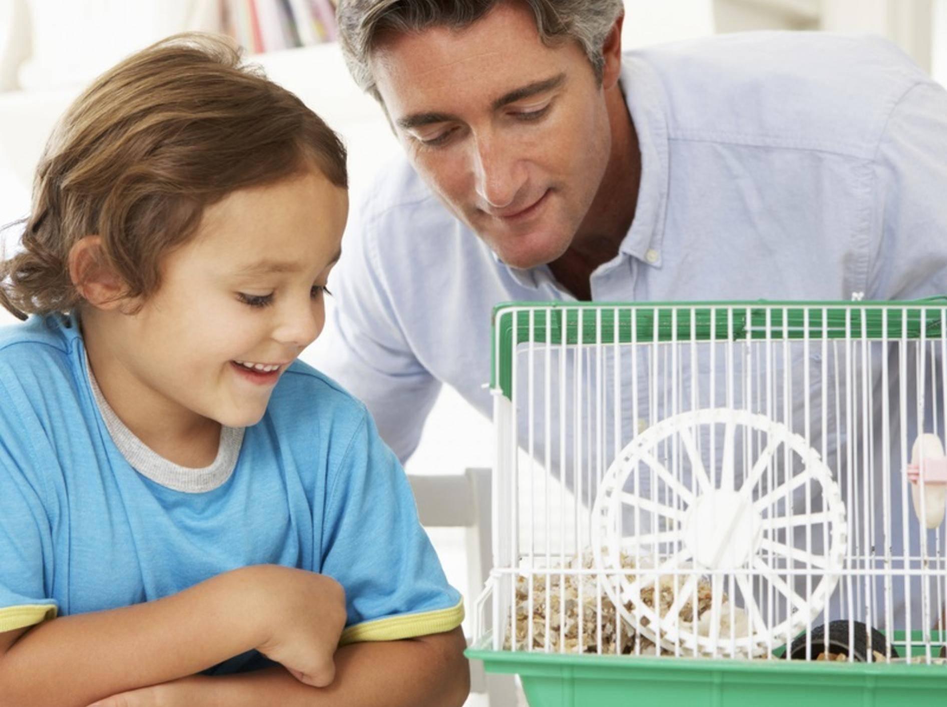 """""""Hamster beobachten macht Spaß und noch viel mehr, wenn Papa dabei ist!"""" – Shutterstock / Monkey Business Images"""