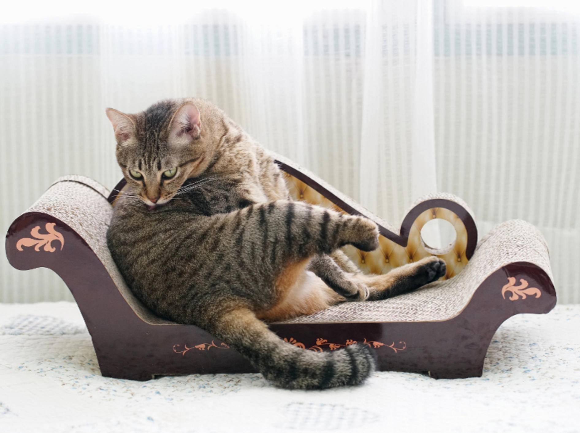 Einfach mal abschalten und sich beruhigen, denkt sich diese Katze und schleckt sich im Rahmen einer harmlosen Übersprungshandlung – Shutterstock / Rapeepan Chamnong