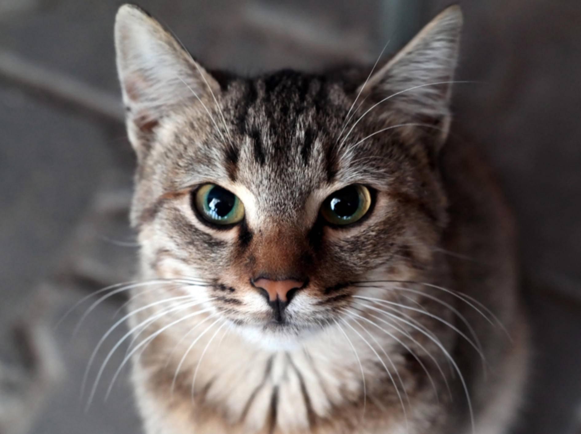 Schau mir in die Augen, Kleines ... – Shutterstock / nrqemi