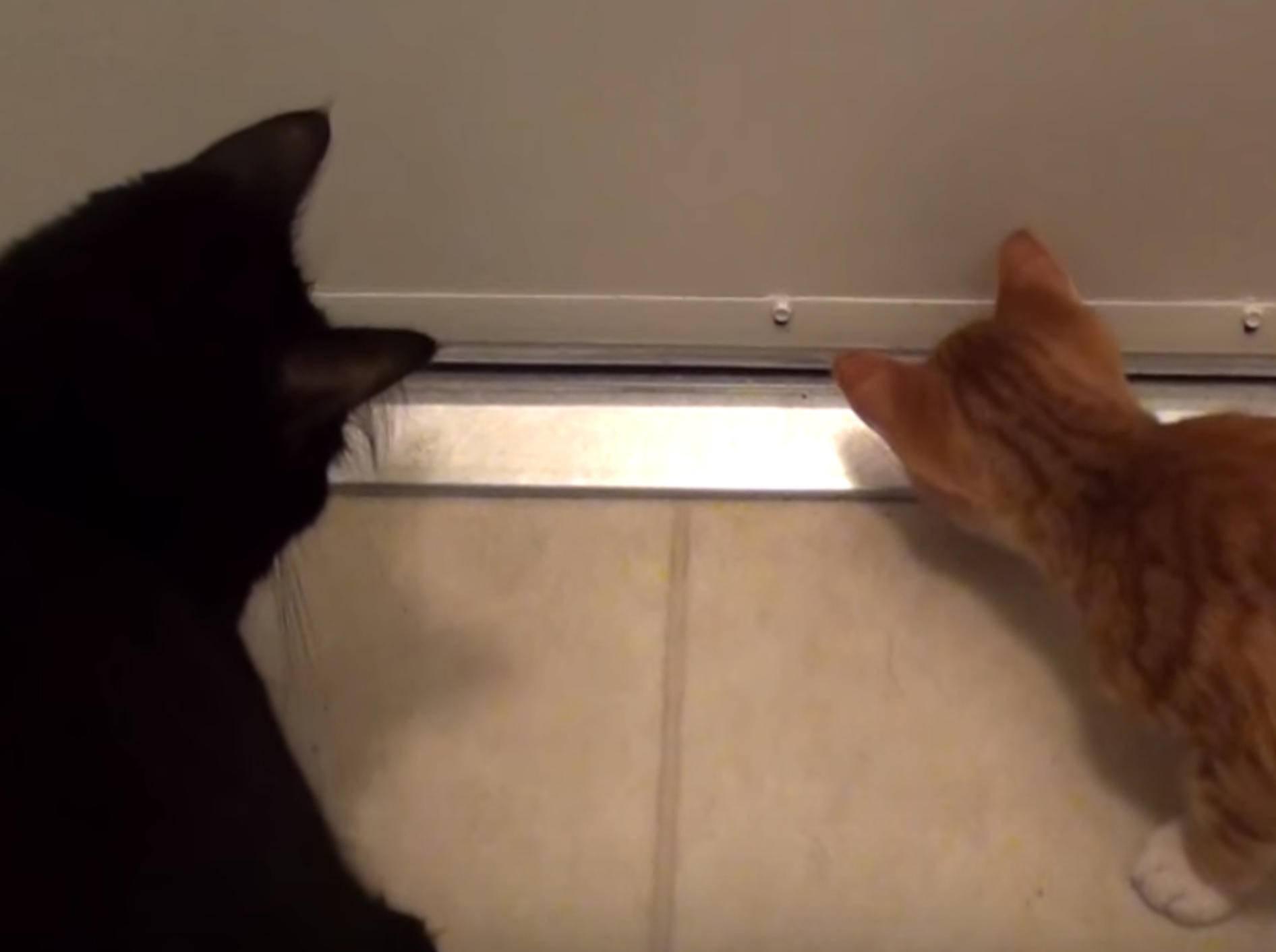 Katzenlogik mit Cole und Marmalade - YouTube / Cole and Marmalade