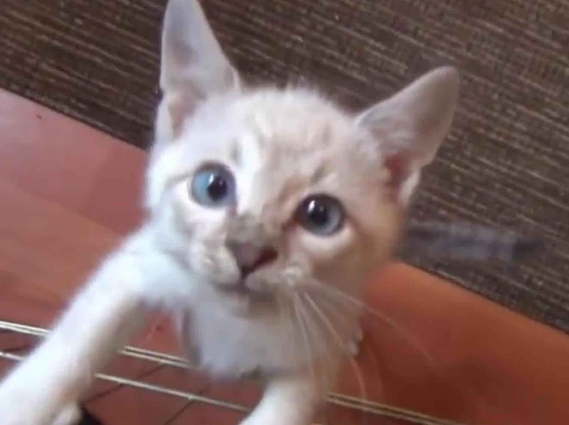 Diese sieben Pflegekatzen sind wirklich goldig – YouTube / DrNworb's KitsCats