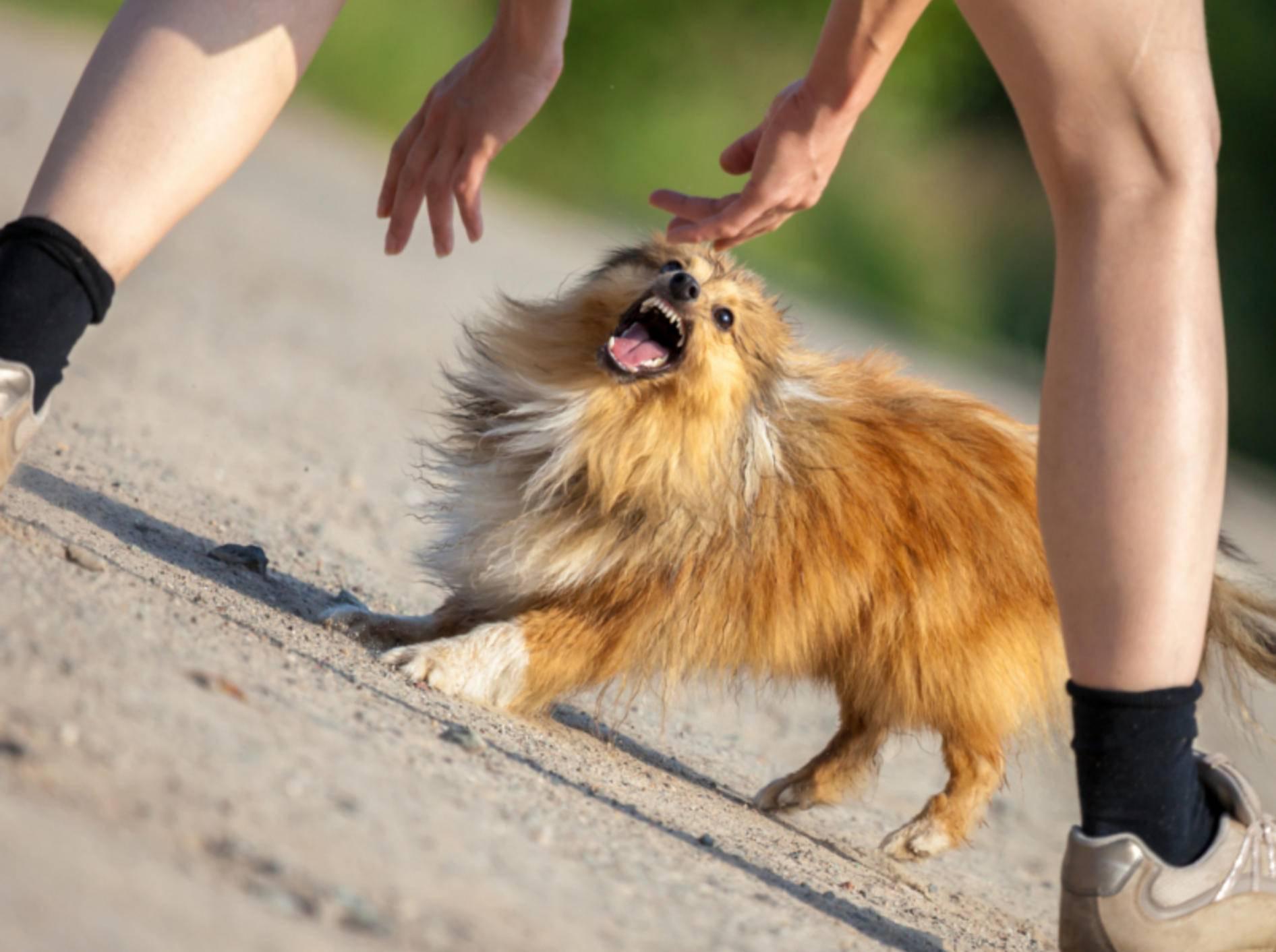 Hunde zu ärgern ist weder witzig noch sinnvoll – Shutterstock / Joerg Huettenhoelscher