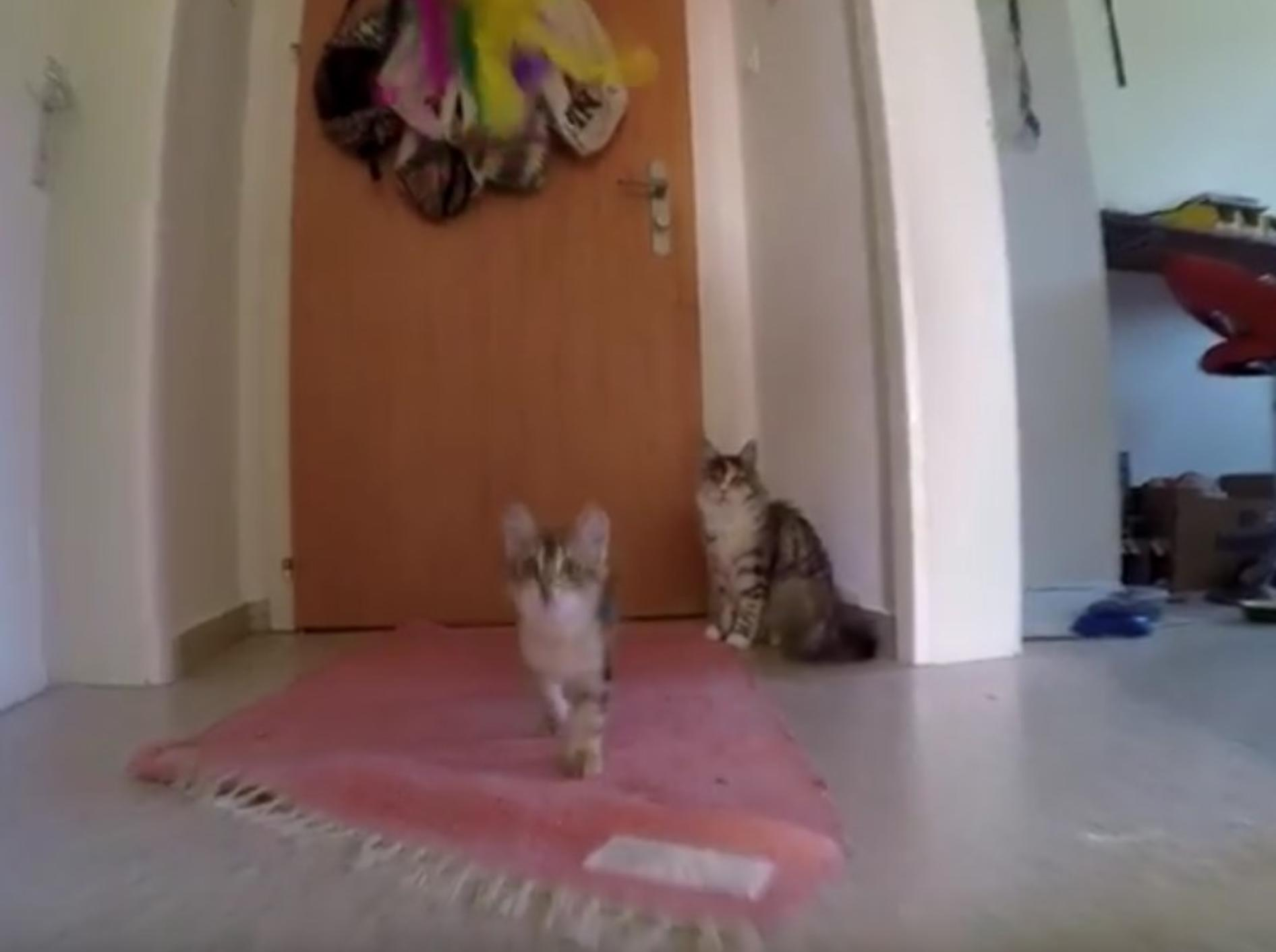 Die zwei Waldkatzen finden immer Wege sich zu beschäftigen – YouTube / ForestCats
