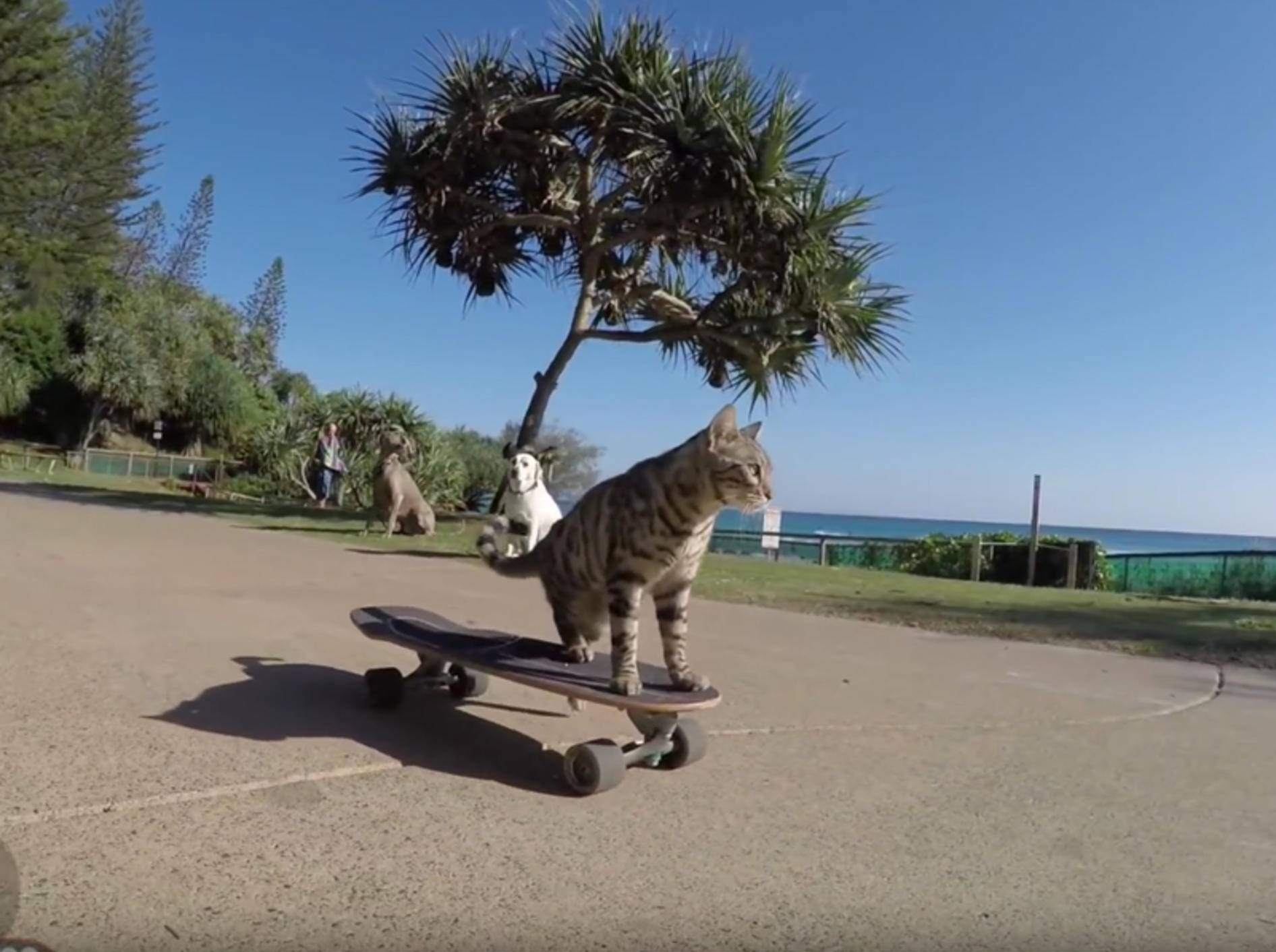 Bengalkater Boomer fährt ganz alleine Skateboard – YouTube / CATMANTOO
