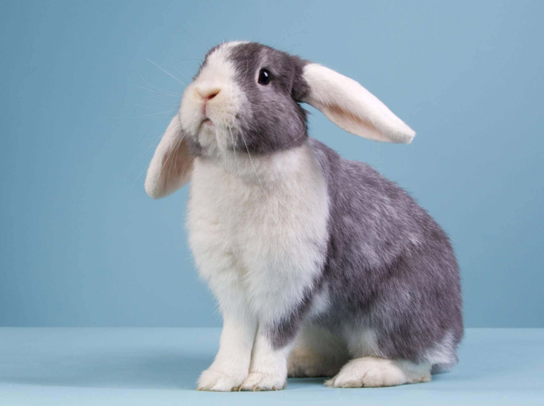 rex kaninchen lebenserwartung