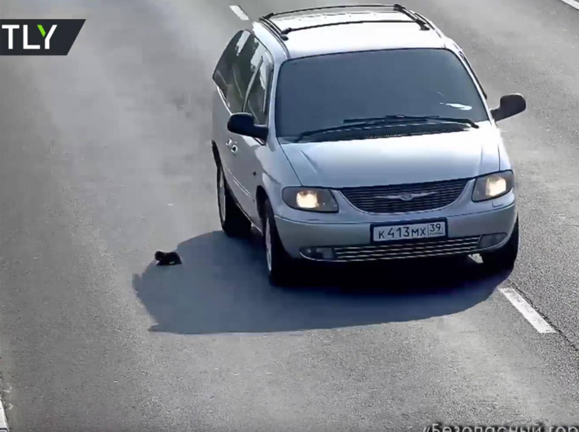 Kätzchen wird beinahe überfahren – YouTube / RT