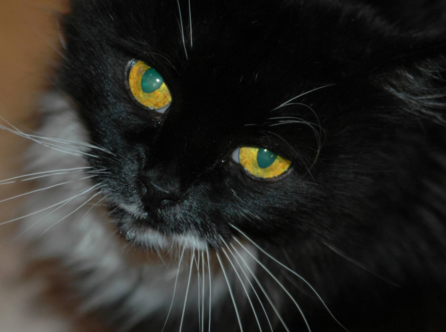 Schwarze Katze mit gelben Augen