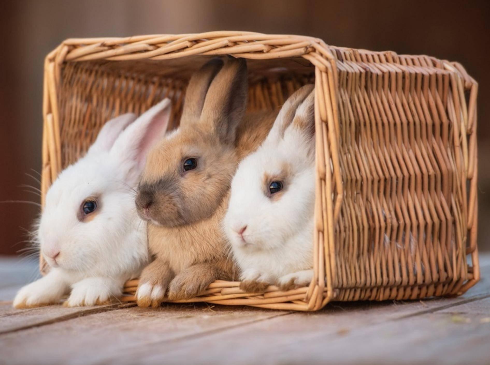 Die geselligen Kaninchen leben am liebsten in einer Gruppe – Shutterstock / Rita Kochmarjova