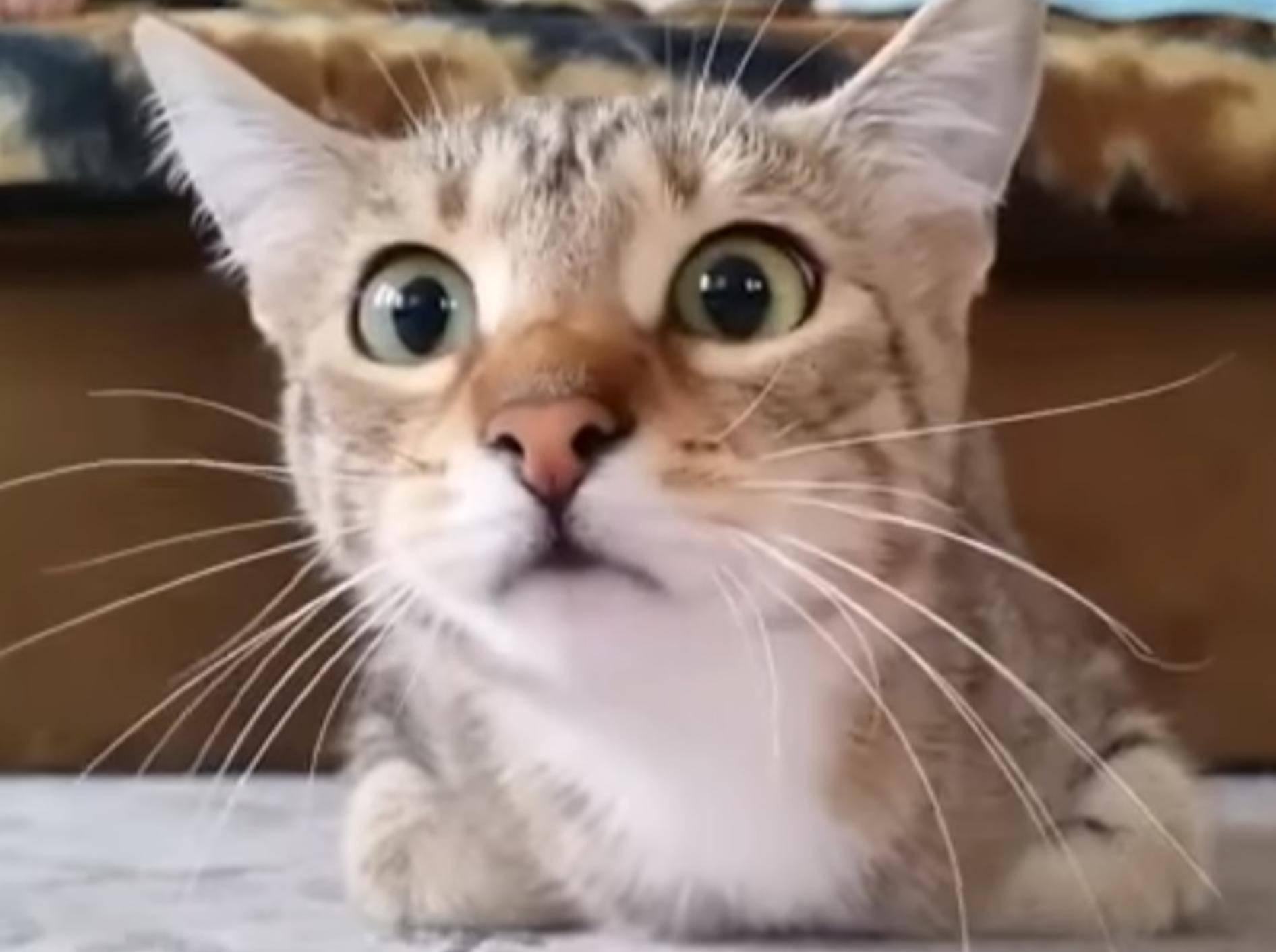 Katze guckt Gruselfilm und findet's spannend – Youtube / RM Videos