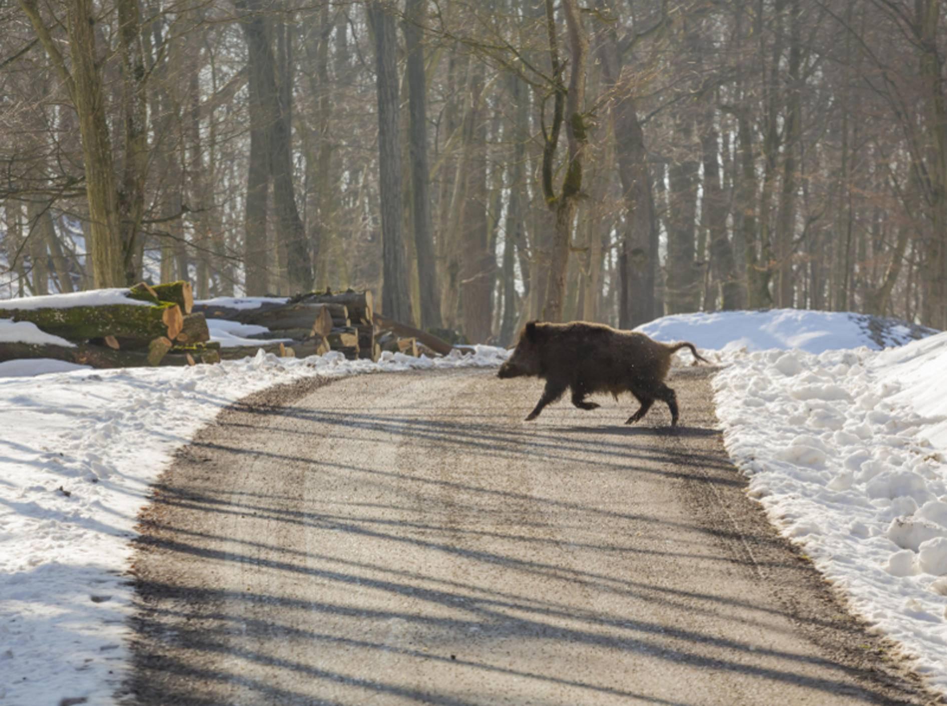 Insbesondere an Waldgebieten oder auf Feldwegen ist das Risiko eines Wildunfalls groß – Shutterstock / Khomenko Volodymyr