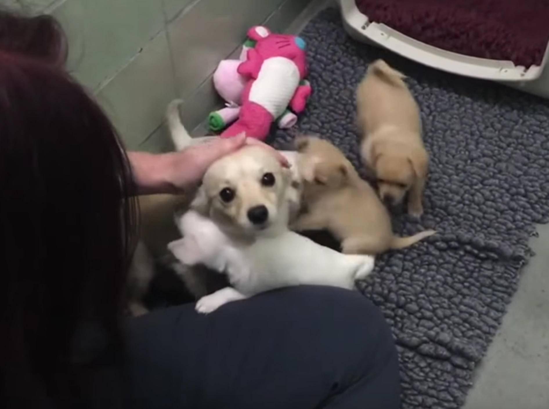 Hundemama Cora sieht ihr süßen Welpen wieder – YouTube / ABC News