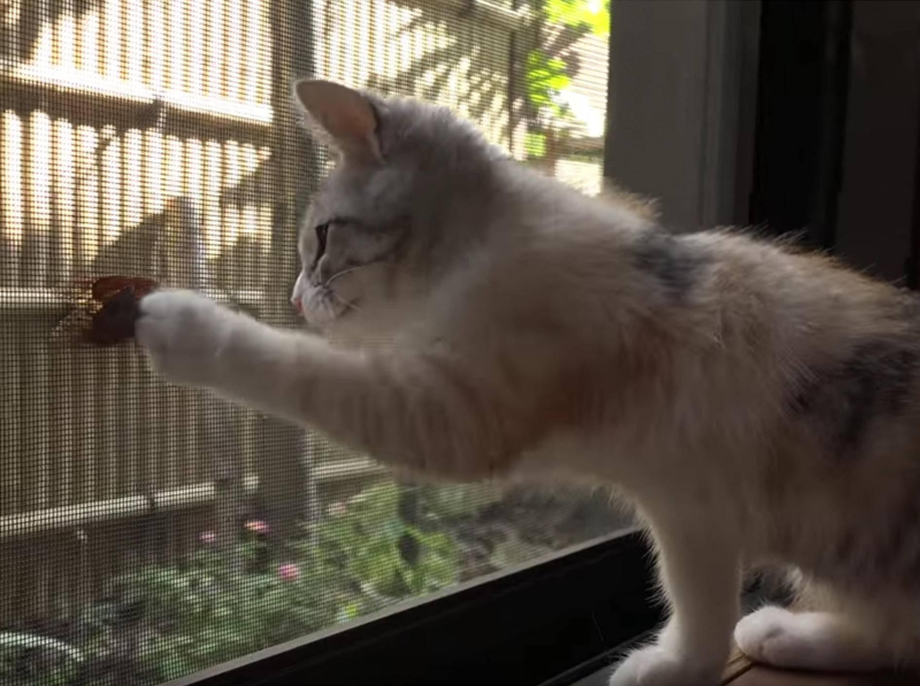 11 Katzen gehen auf Zikadenjagd – YouTube/10 Cats.