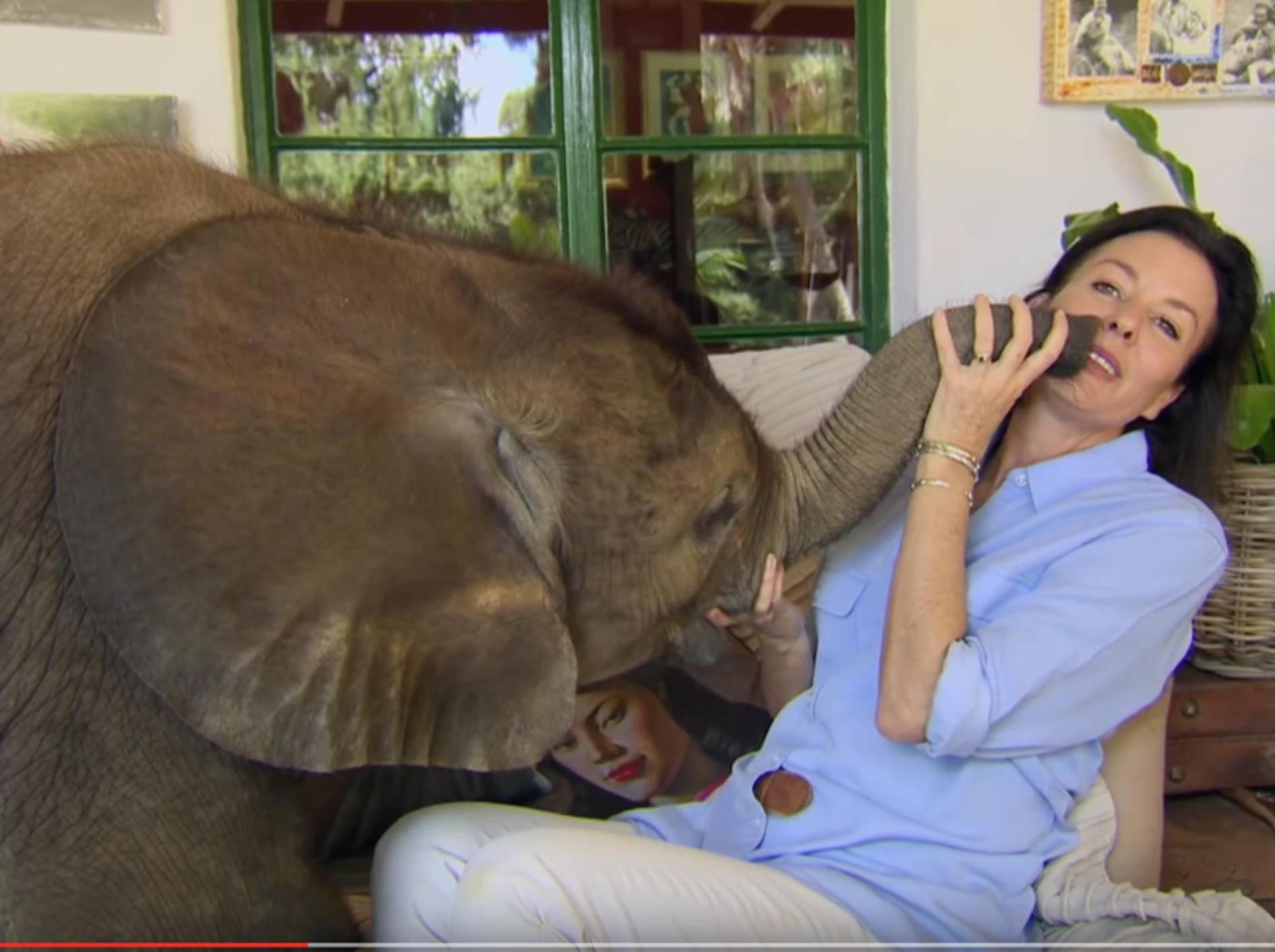 Kleiner Elefant weicht seiner Retterin nicht von der Seite – YouTube / BBC