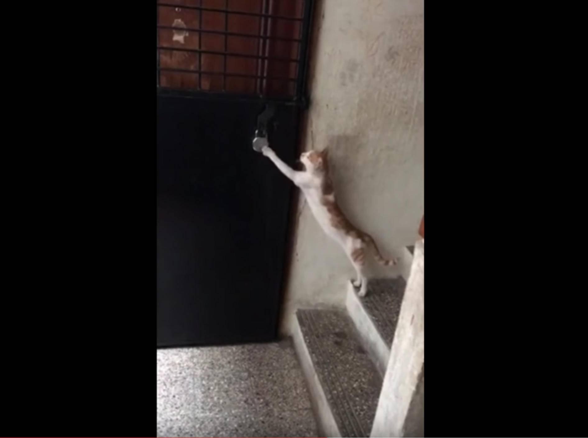 Höfliche Katze klopft an die Tür und erbittet Einlass – YouTube / Rumble Viral
