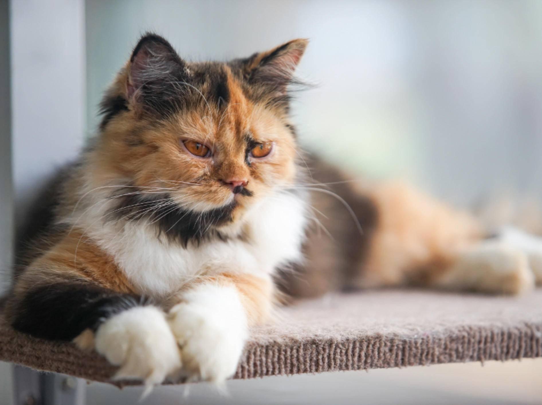 Katzen haben gerne die Übersicht und einen sicheren Rückzugsort – Shutterstock / NARUCHA KLINUDOM