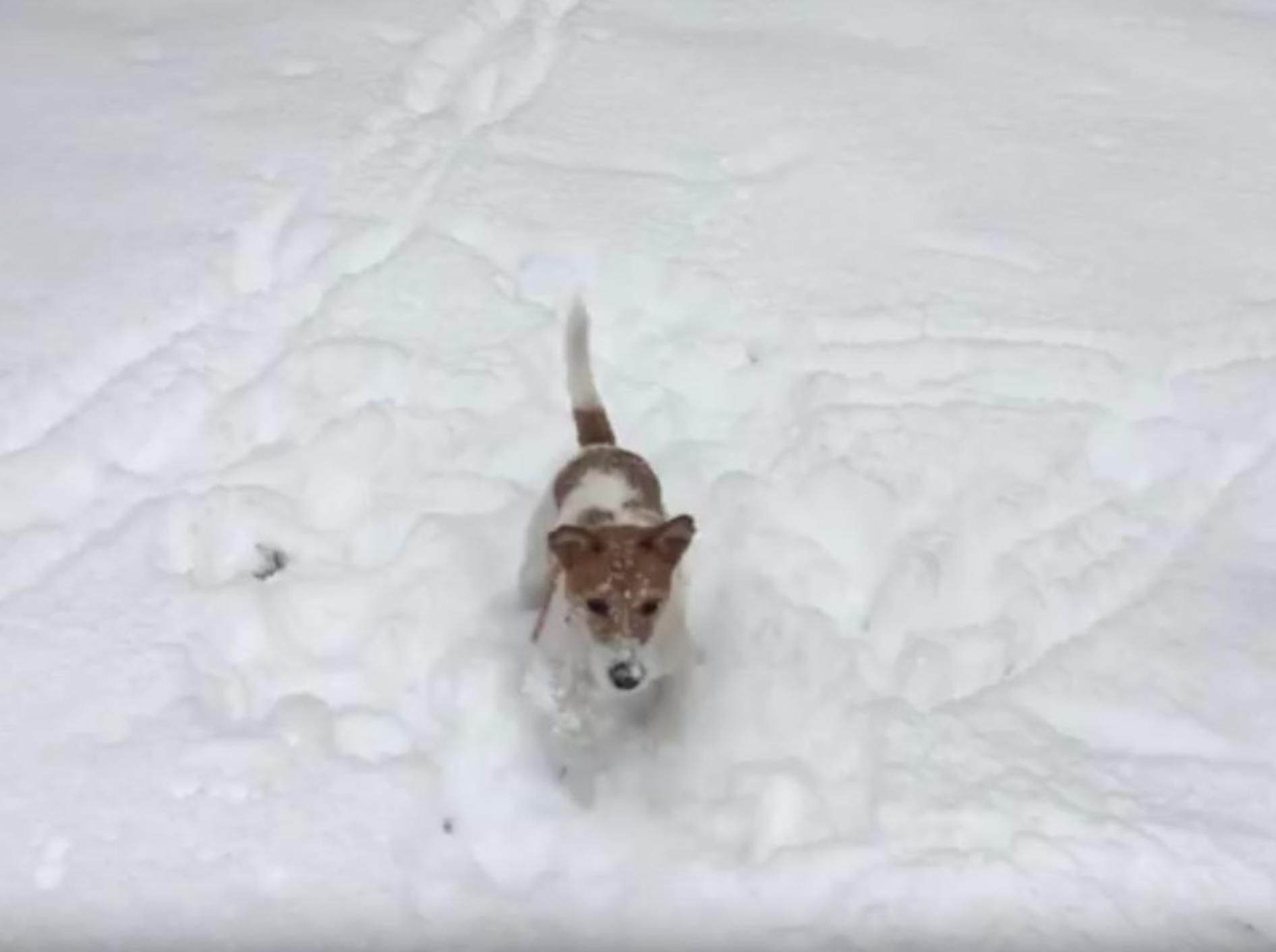 Wie viel Spaß Schnee machen kann, beweist dieser Racker – YouTube / Rumble Viral