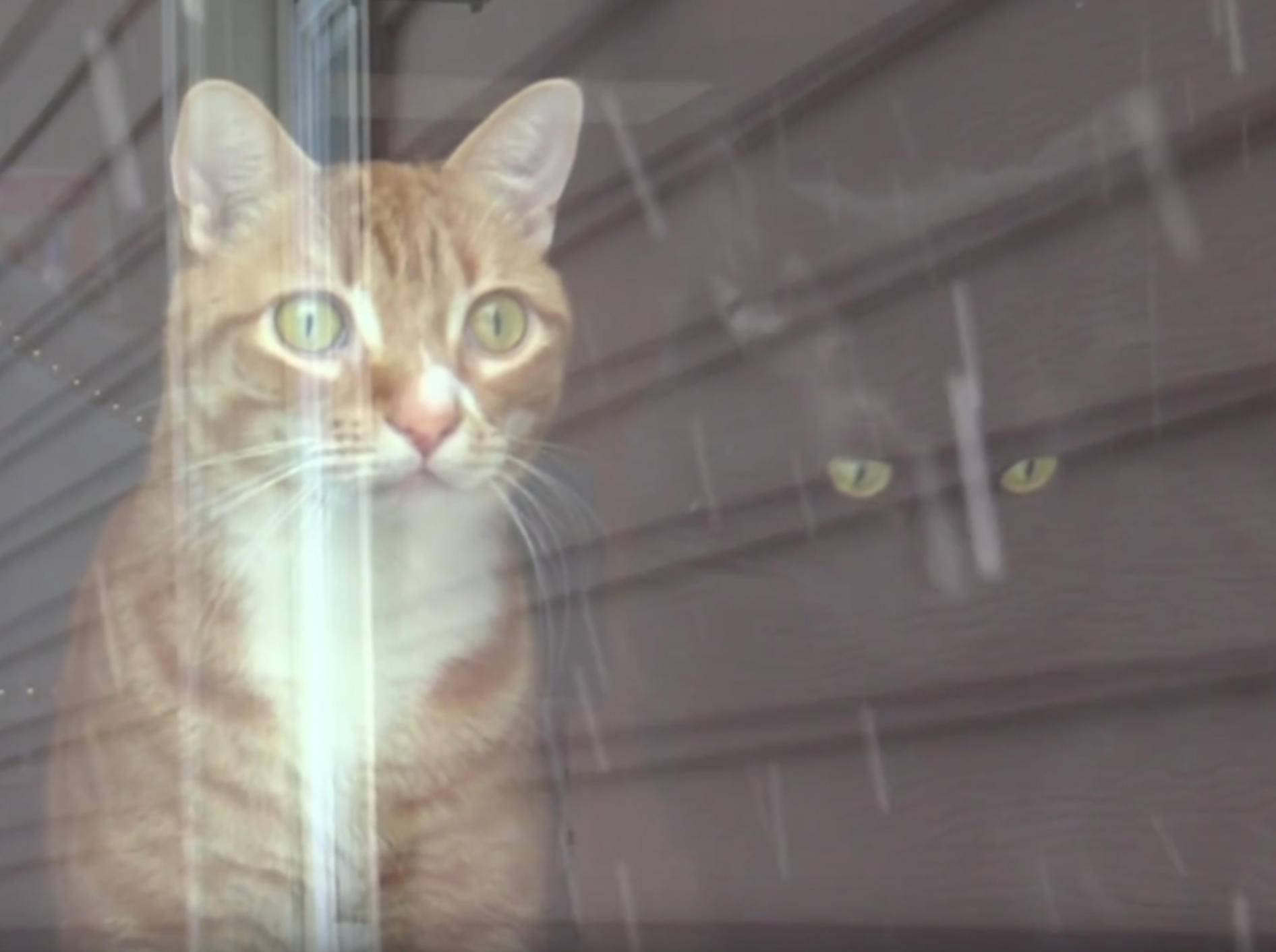 Cole und Marmalade: Erster Spaziergang im Schnee – YouTube / Cole and Marmalade